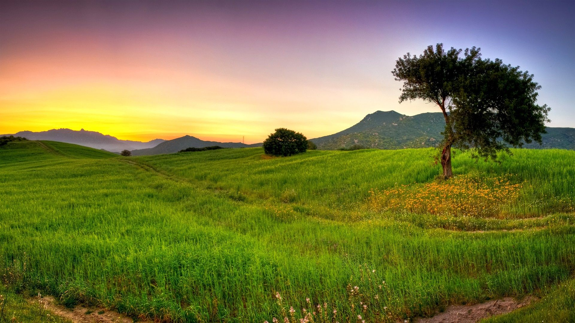 single tree and green grass nature wallpaper