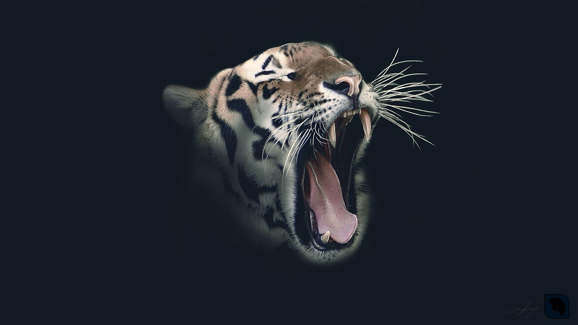 Tiger Roars Face Art, Cool HD Wallpaper