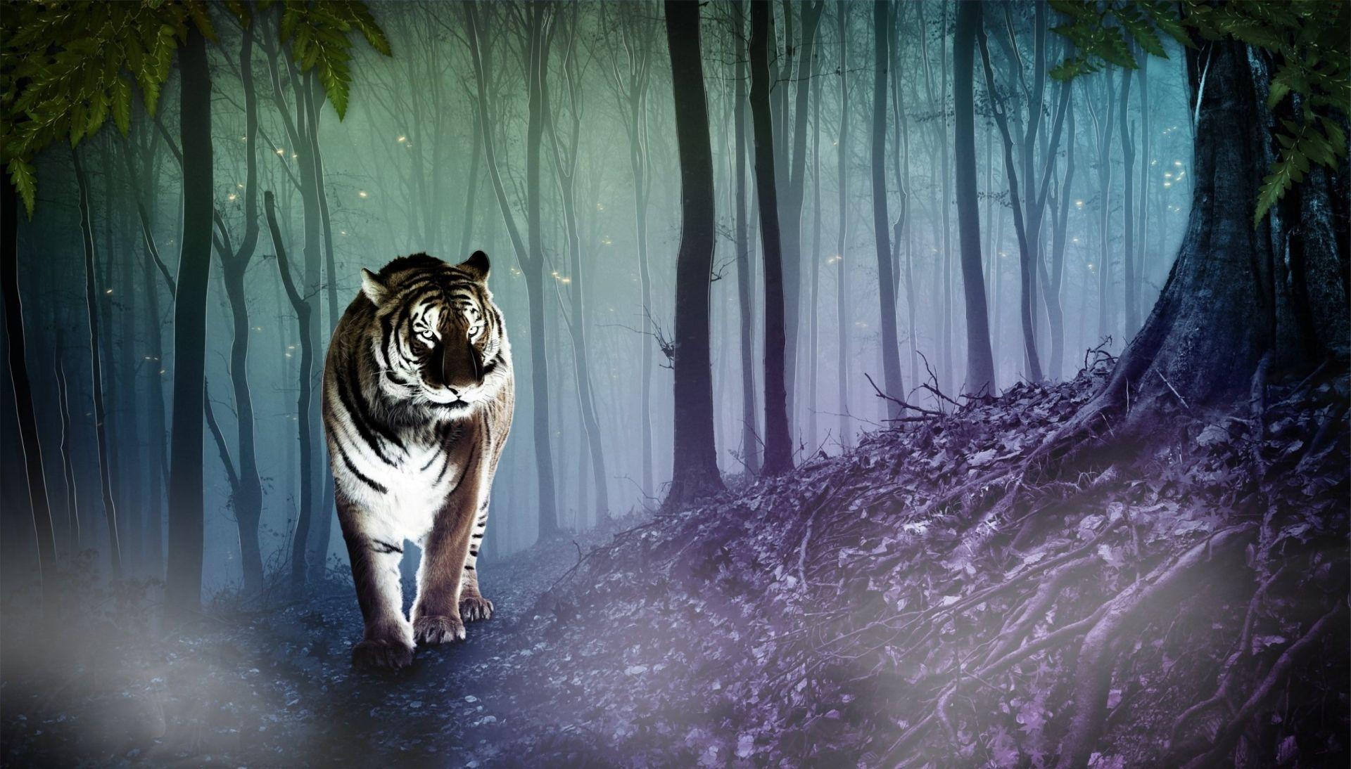 туристов логово тигров фон часто испытывают трудности