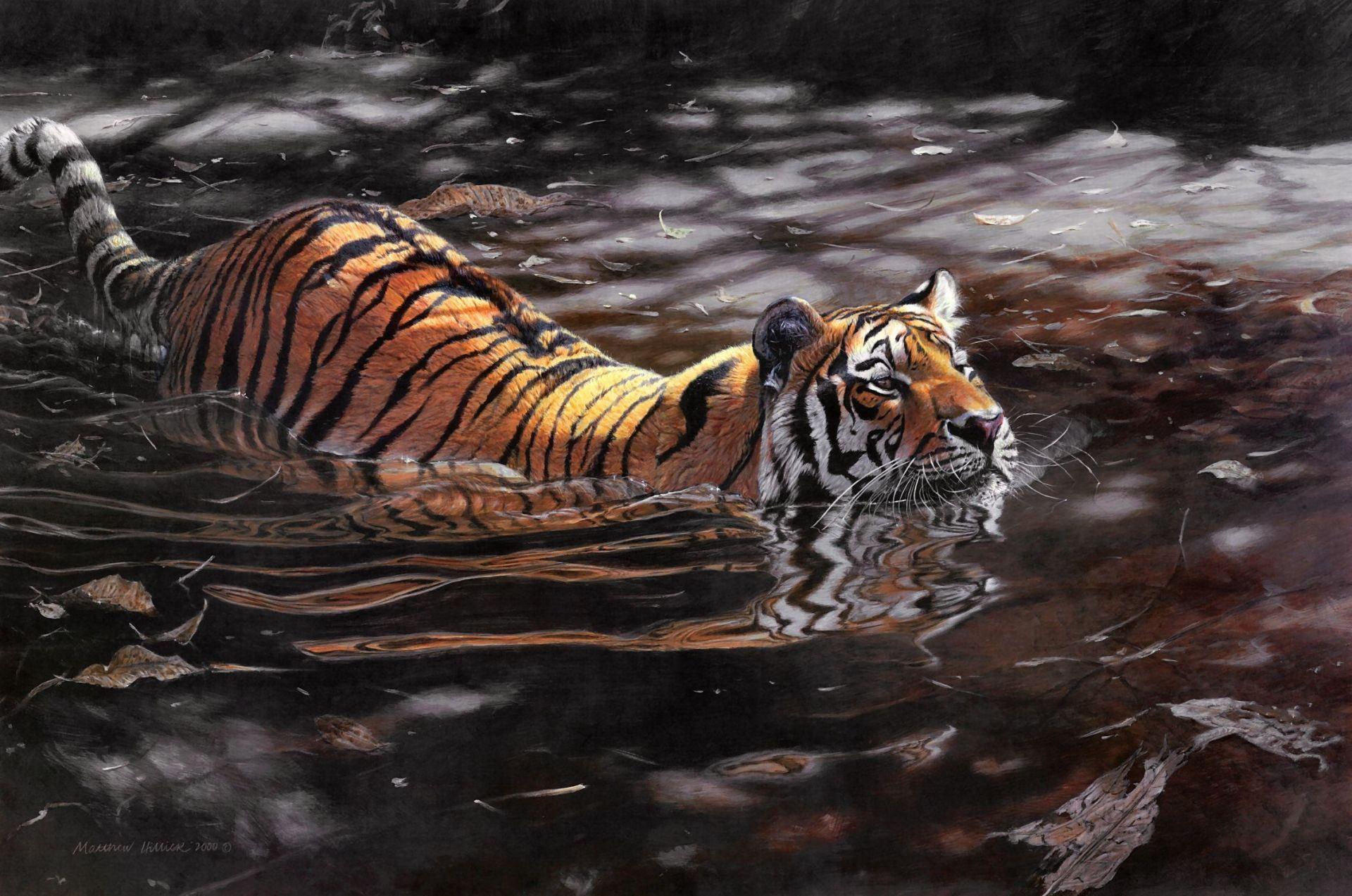 Tiger Swiming Art, Wallpaper