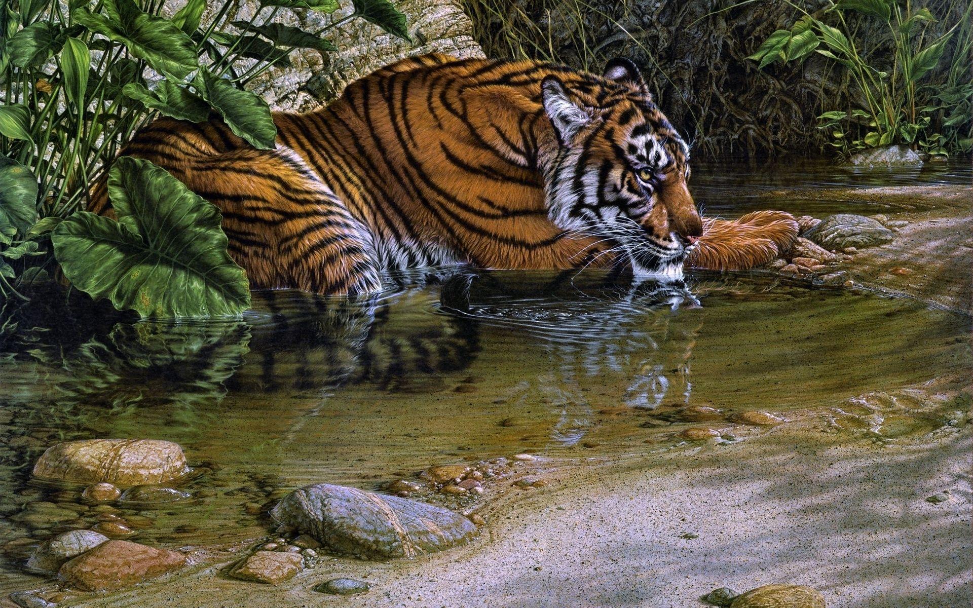 Tiger Art, HD Wallpaper