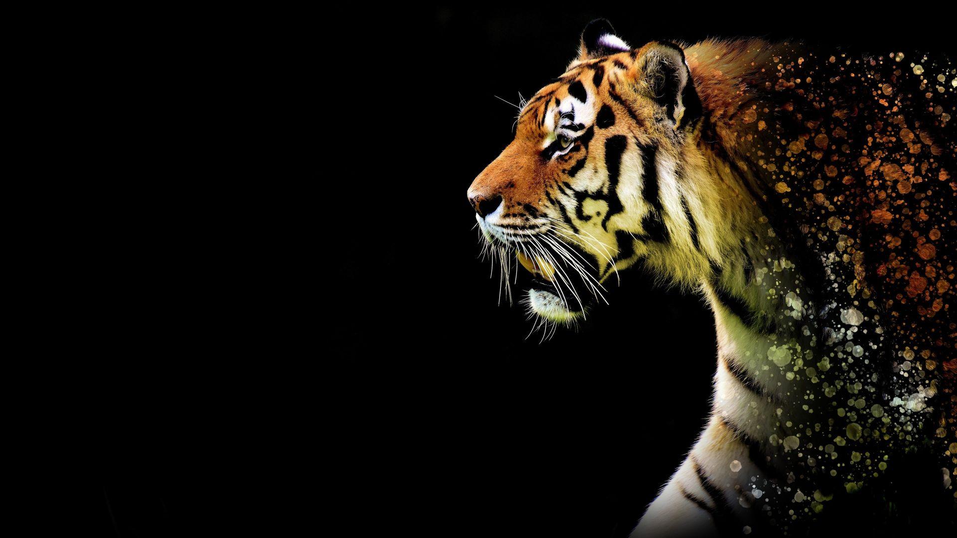 Tiger Art, Image