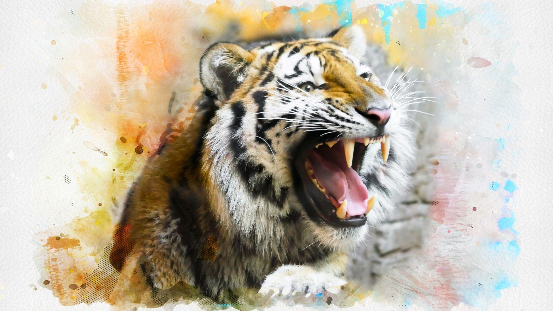 Tiger Art, Pic