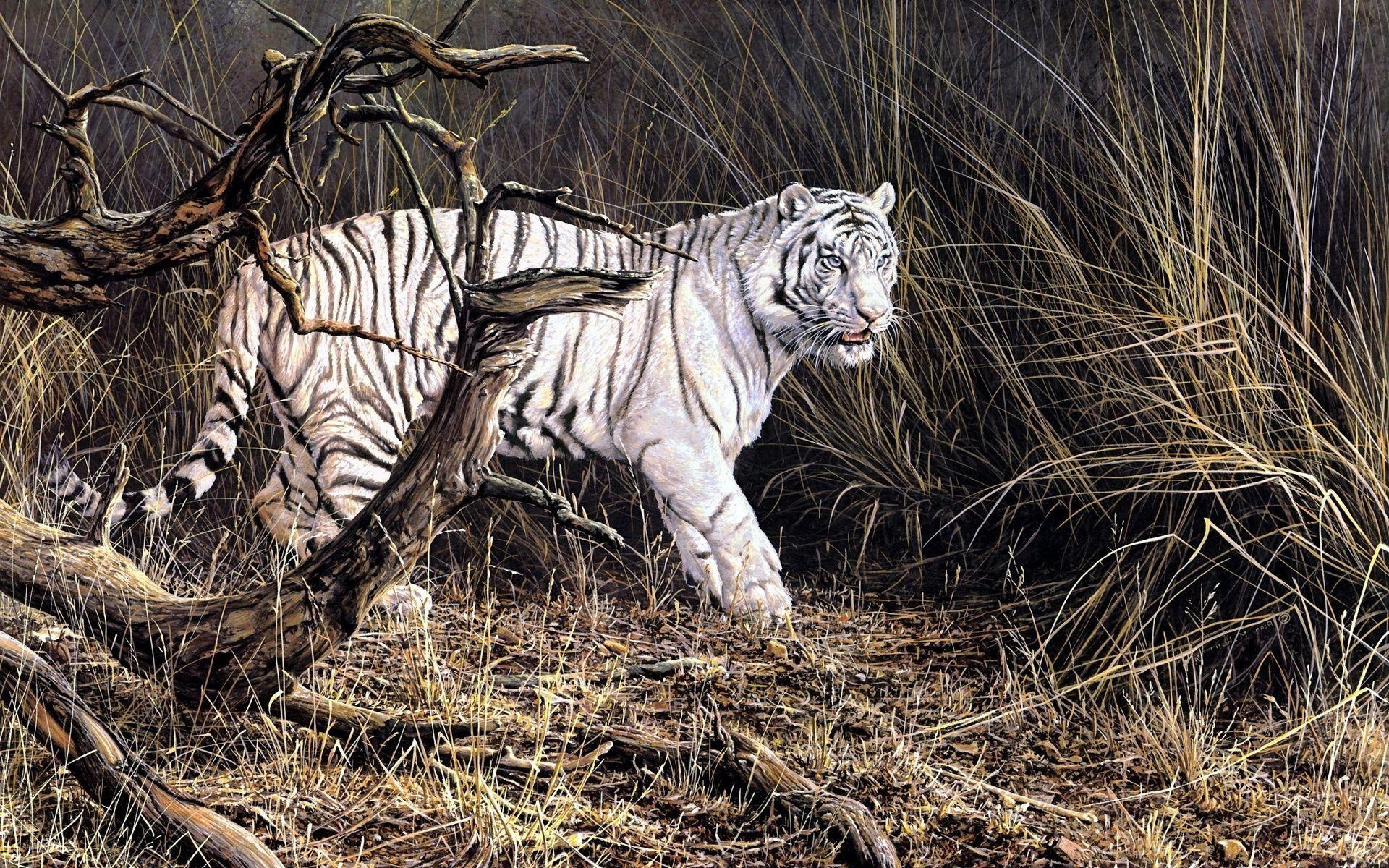 White Tiger Art, Wallpaper