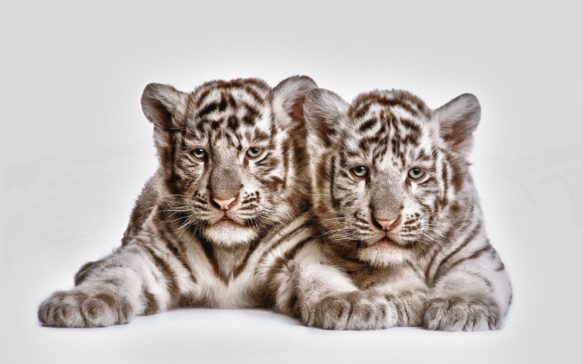 Tiger Baby, Good Wallpaper