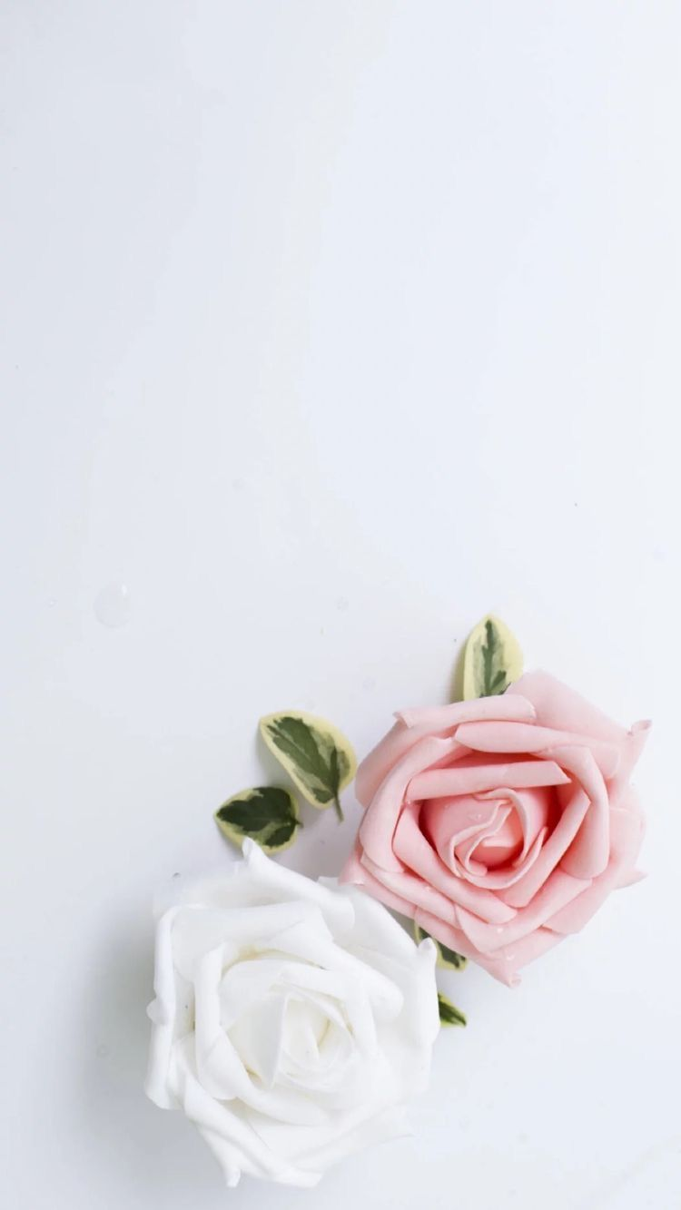 white rose wallpaper iphone