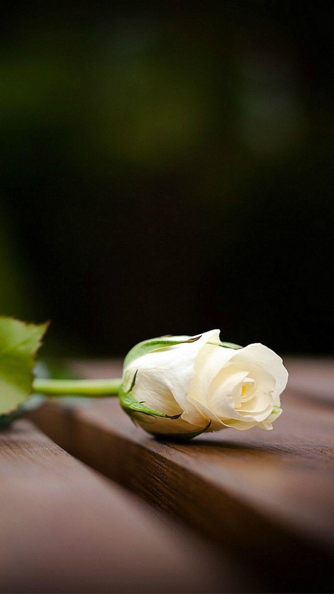 black background white rose