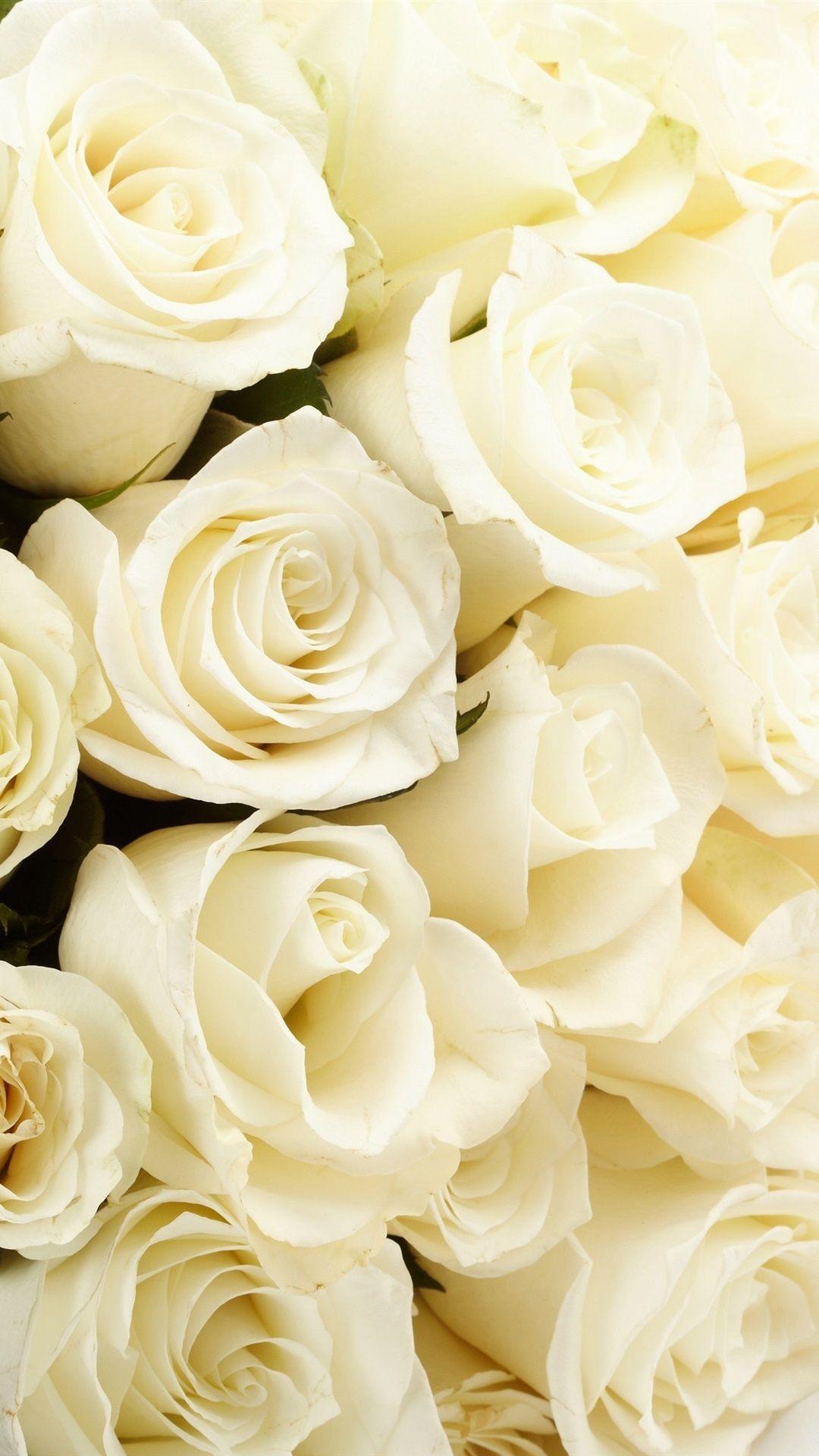 white rose wallpaper for mobile