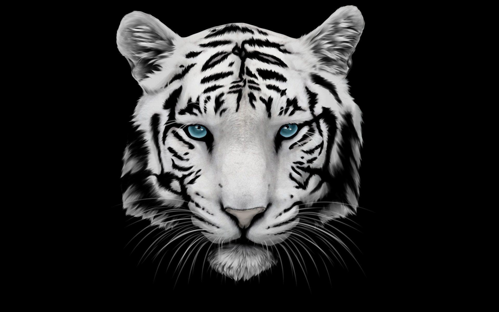 White Tiger Face, Full HD Wallpaper