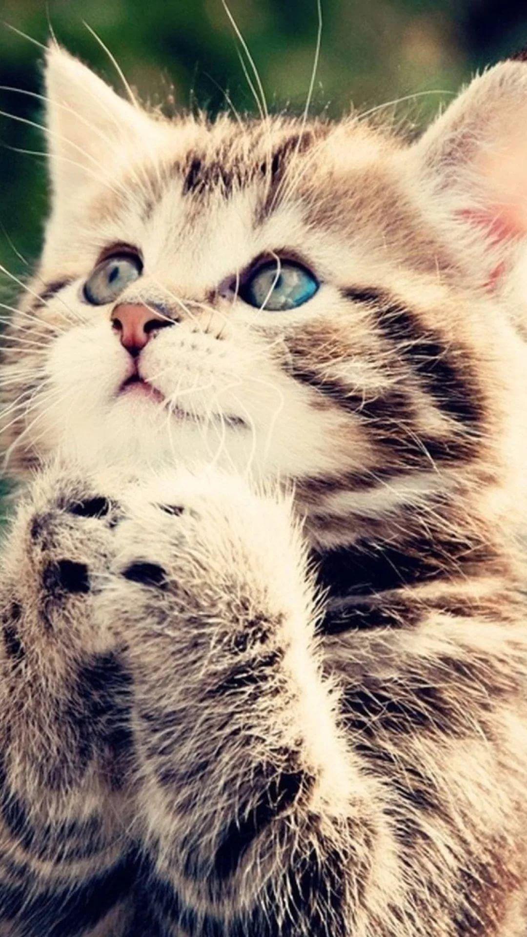 Beautiful Cat Android p wallpaper