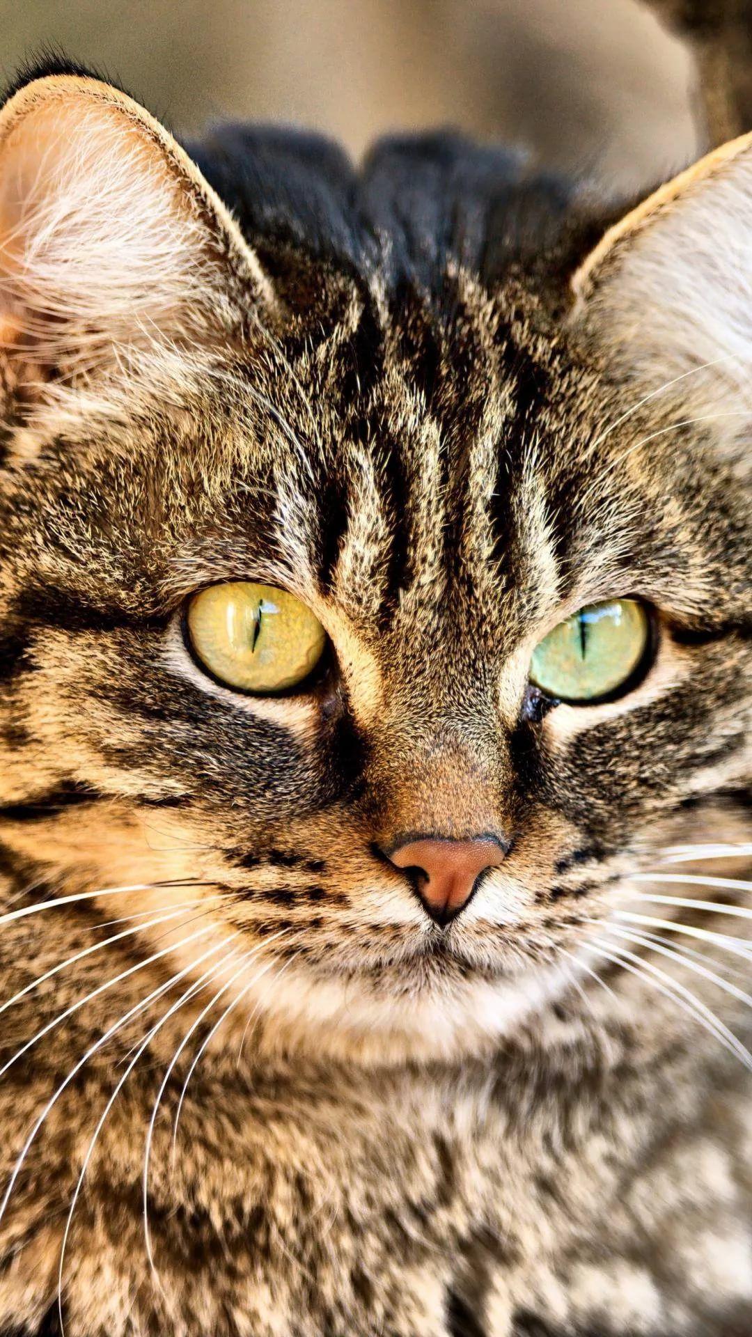Beautiful Cat s7 wallpaper