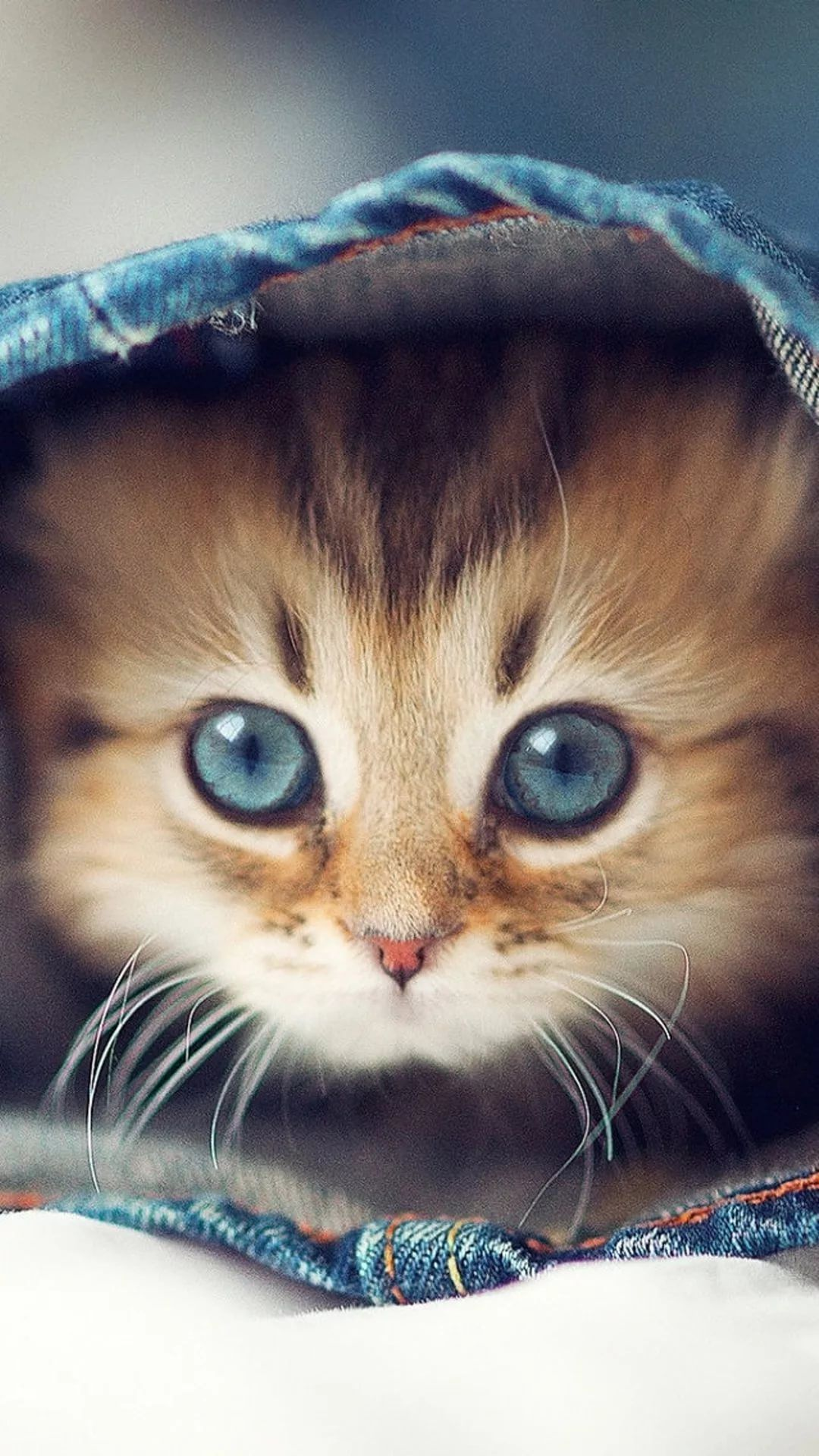 Cats Iphone Wallpapers 20 Images Wallpaperboat