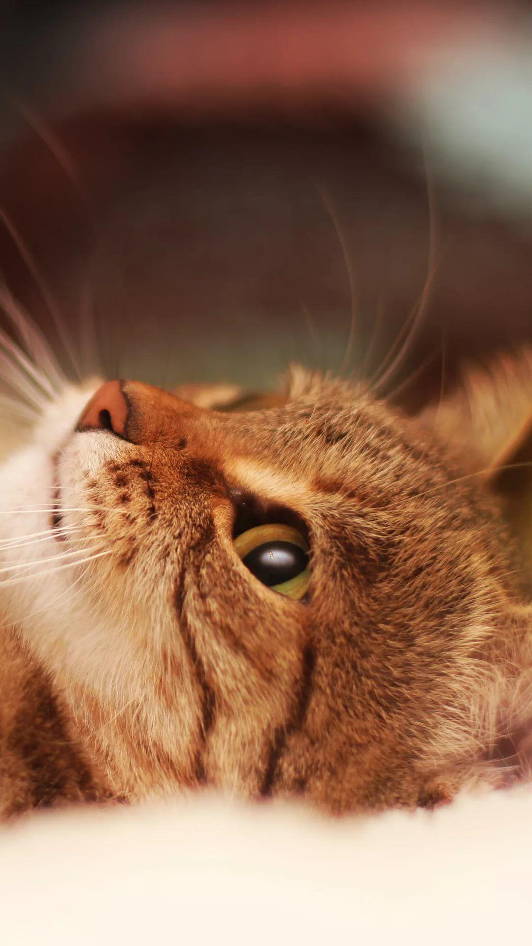 Beautiful Cat Samsung Galaxy wallpaper