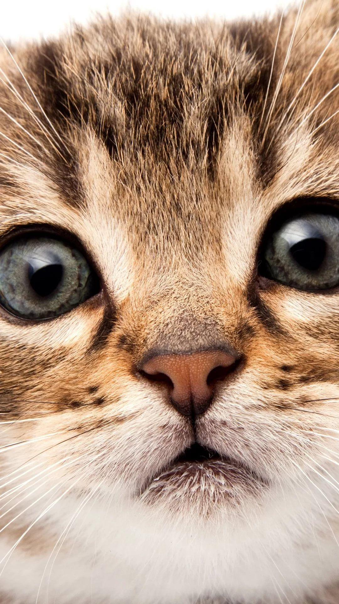 Beautiful Cat s7 Edge Wallpaper