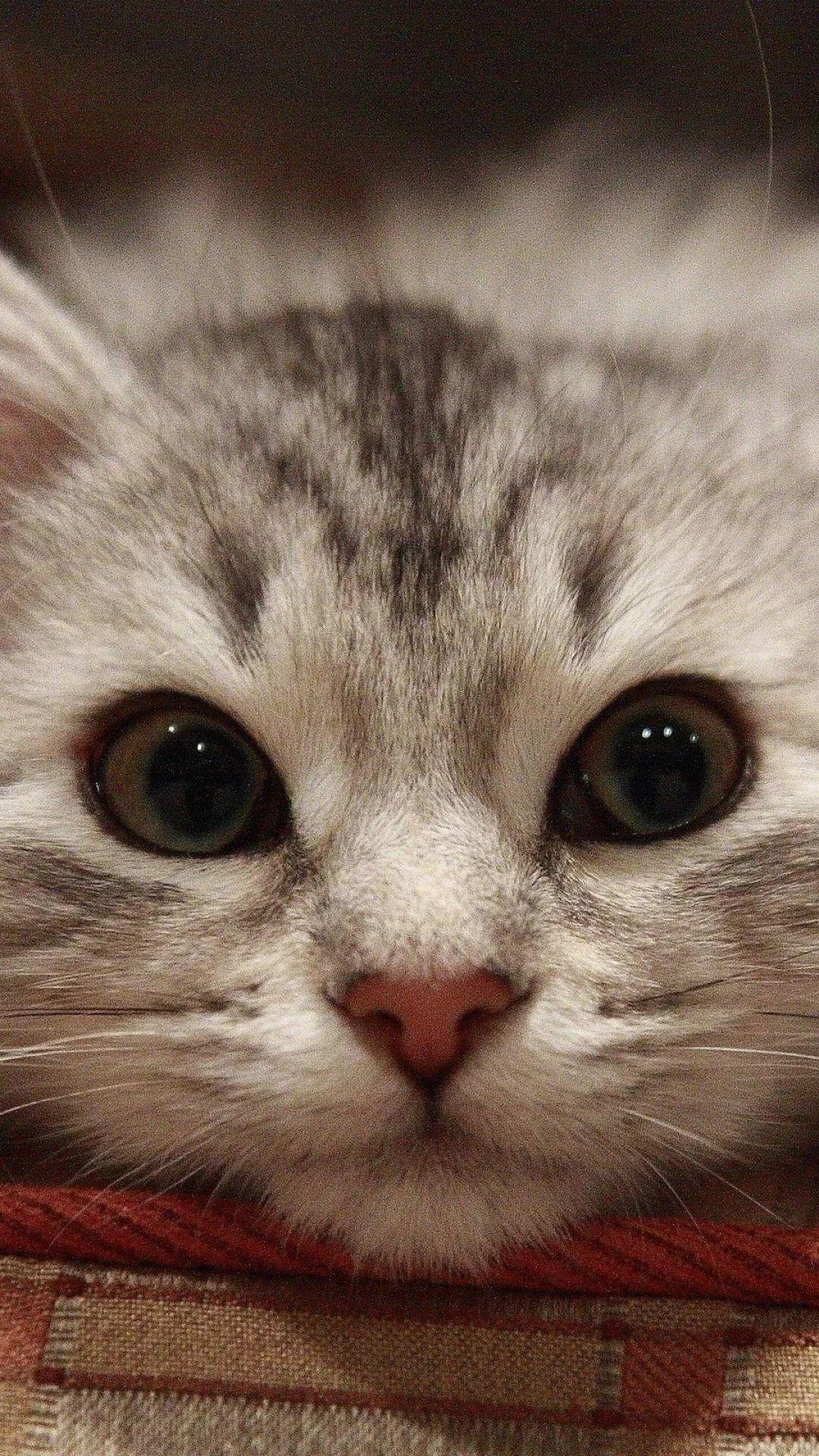 Beautiful Cat iPhone xs max wallpaper