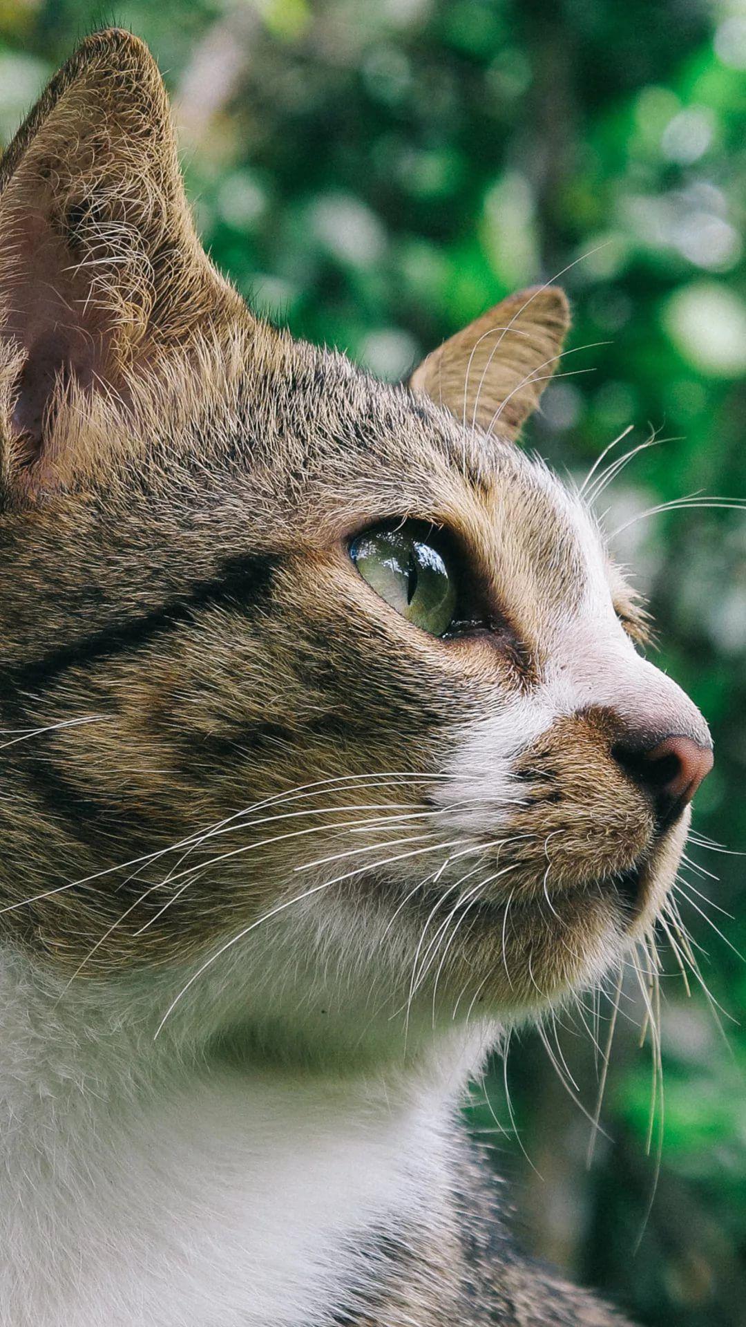 Beautiful Cat iOS 8 wallpaper