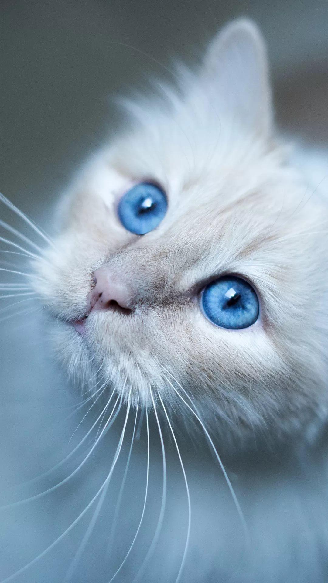 Beautiful Cat iPhone x wallpaper