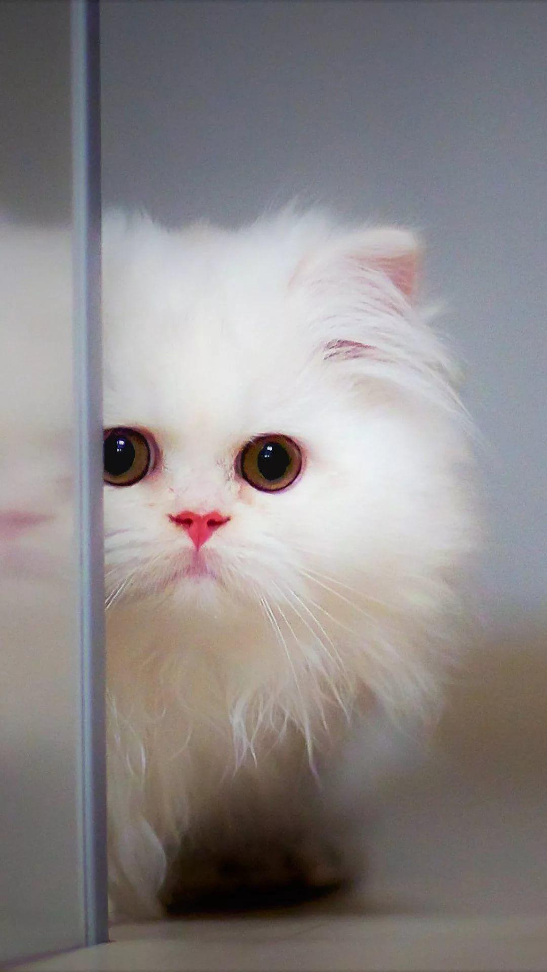 Beautiful Cat Apple wallpaper HD