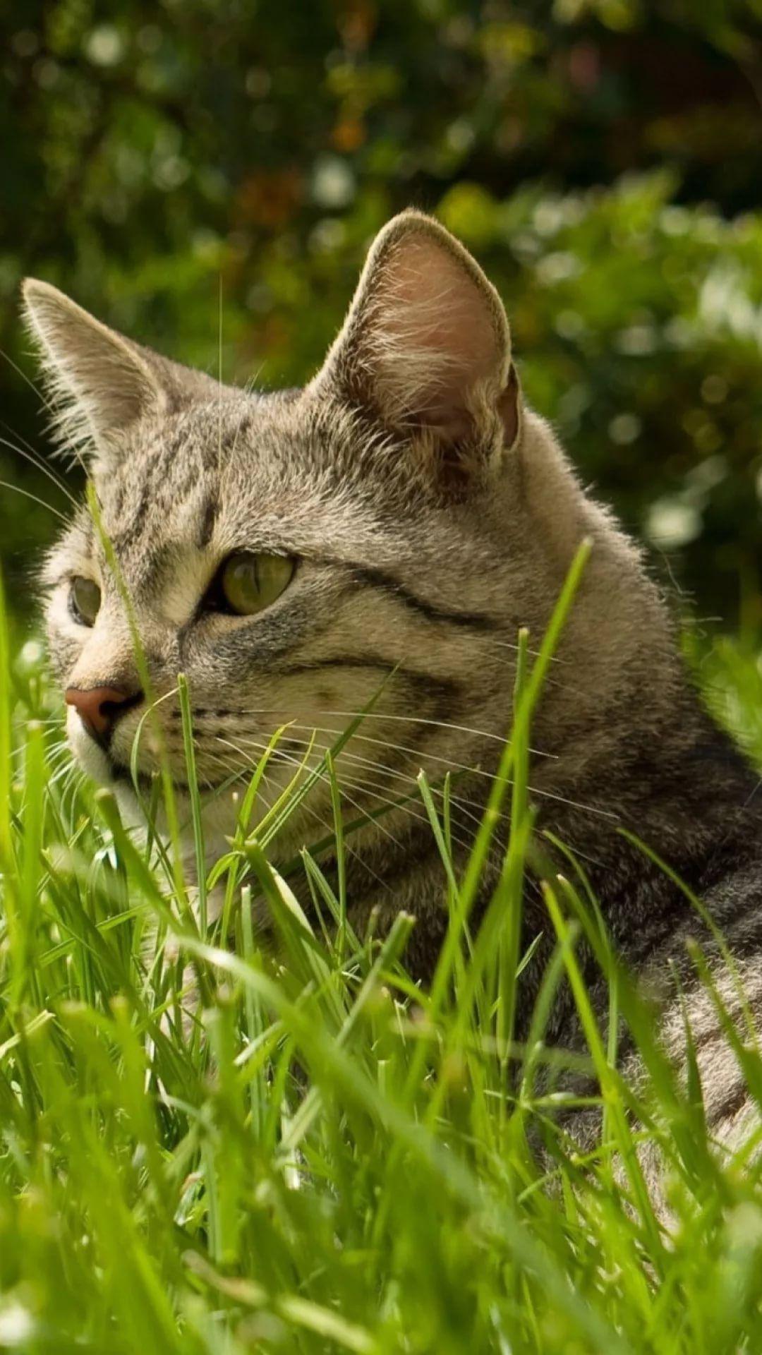 Beautiful Cat HD wallpaper for mobile