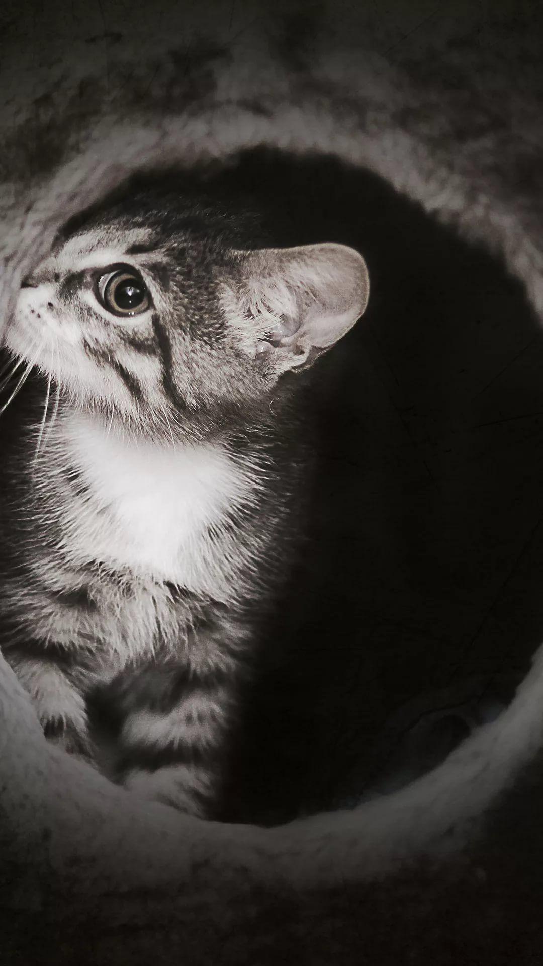 Beautiful Cat HD wallpaper for iPhone 6 1080p