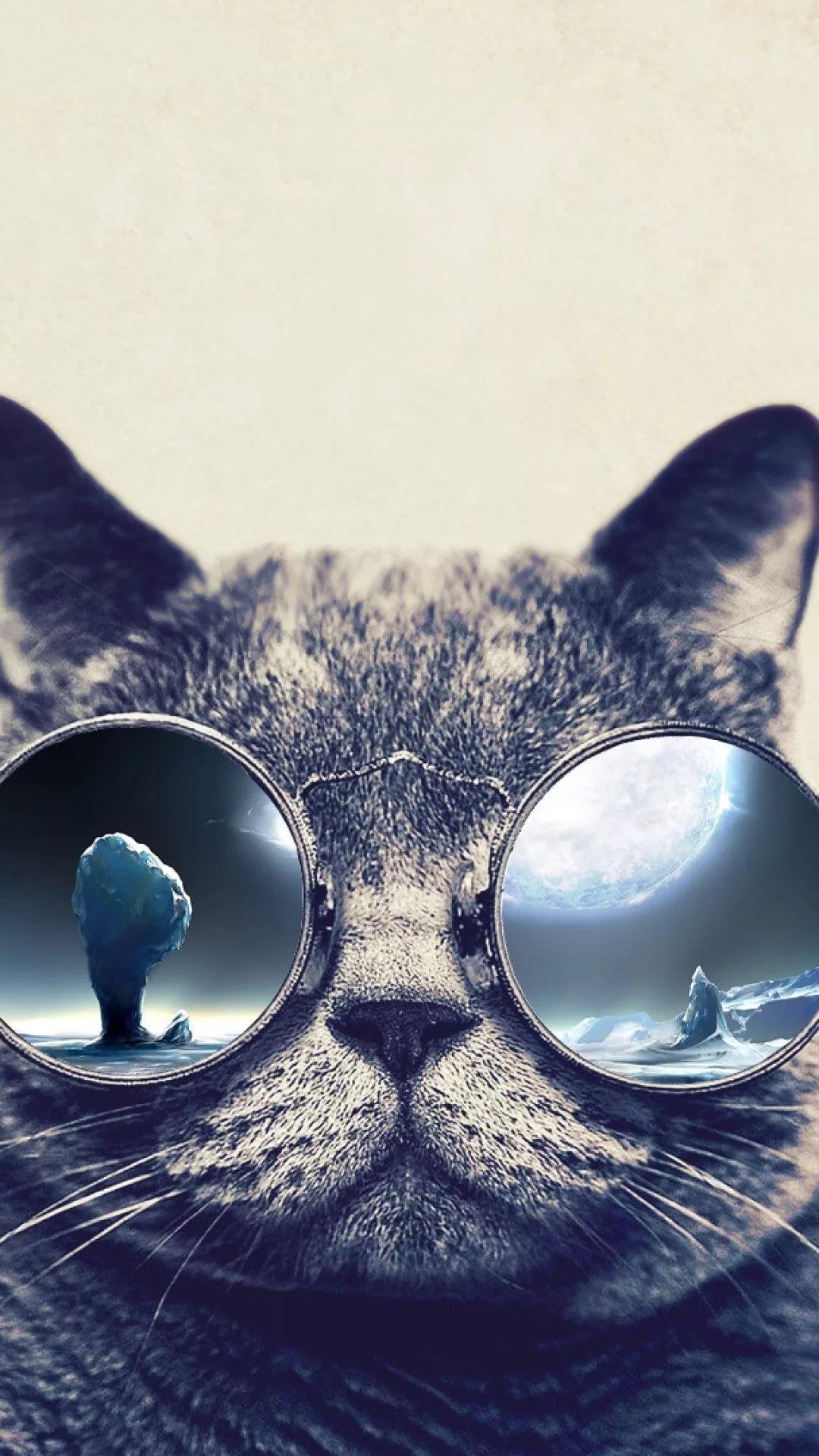 Beautiful Cat background wallpaper