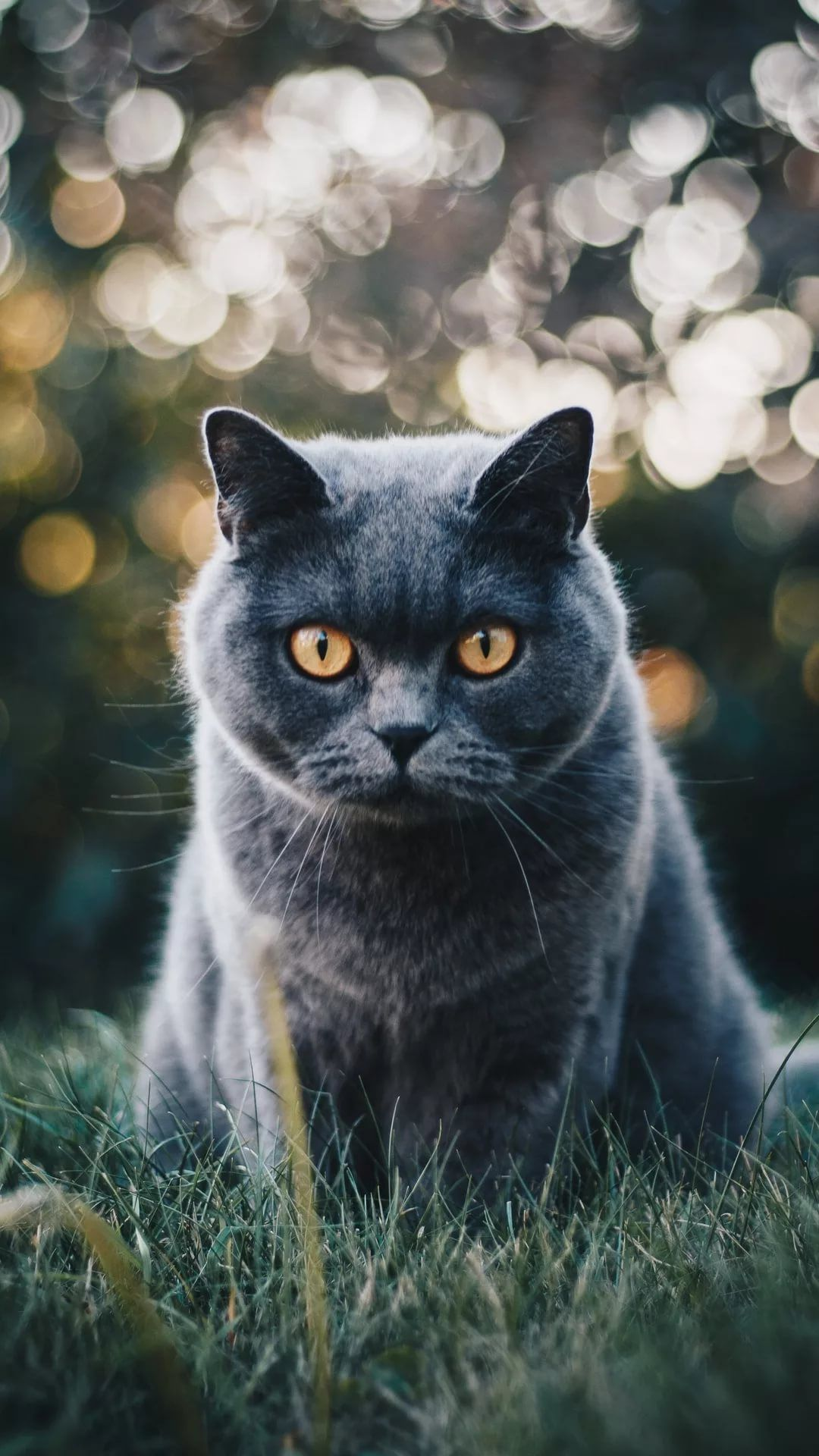 Beautiful Cat screen saver wallpaper