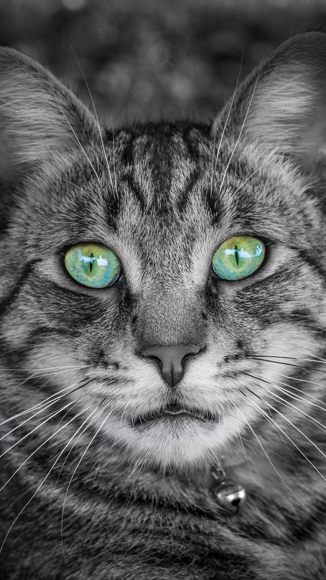 Beautiful Cat samsung wallpaper