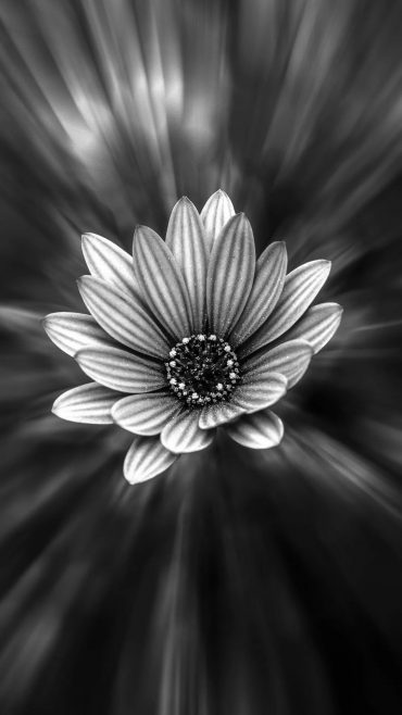 Black And White Flower s7 Edge Wallpaper