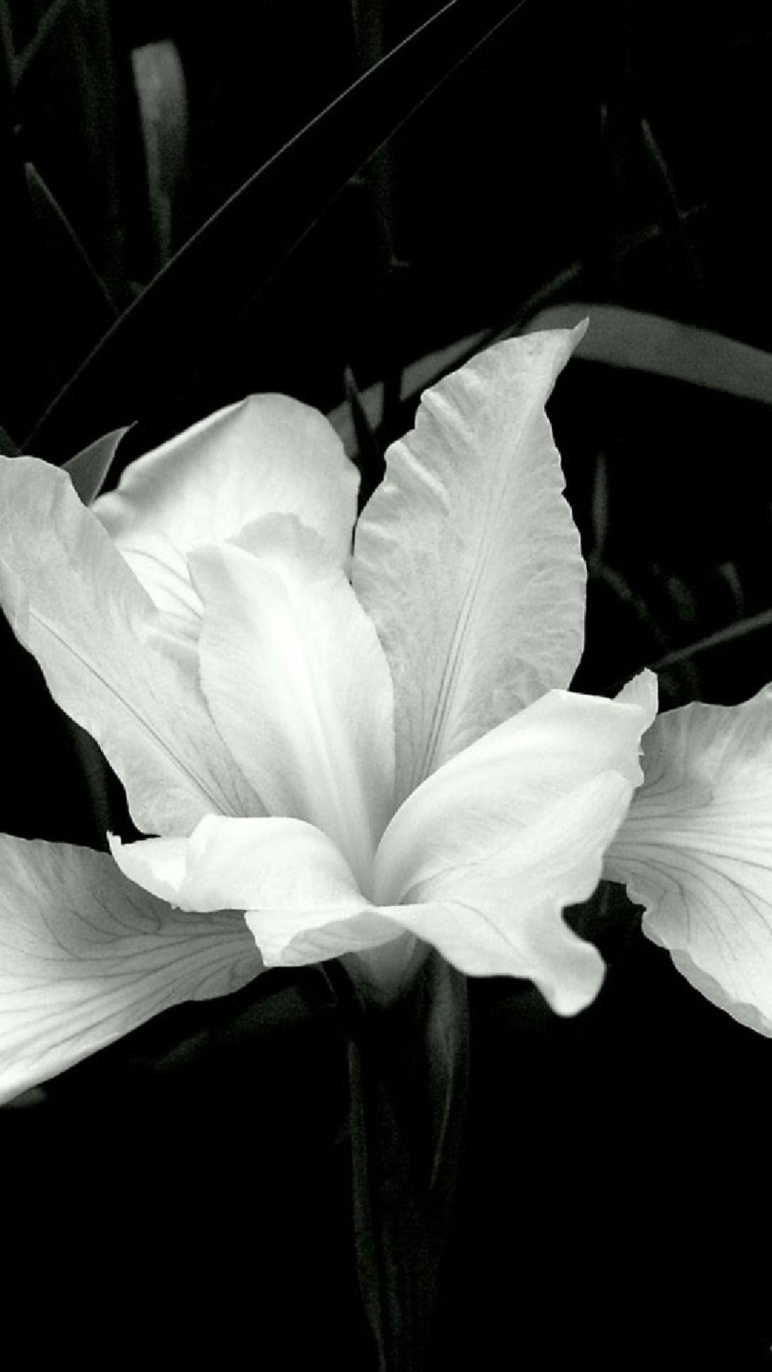 Black And White Flower s7 wallpaper