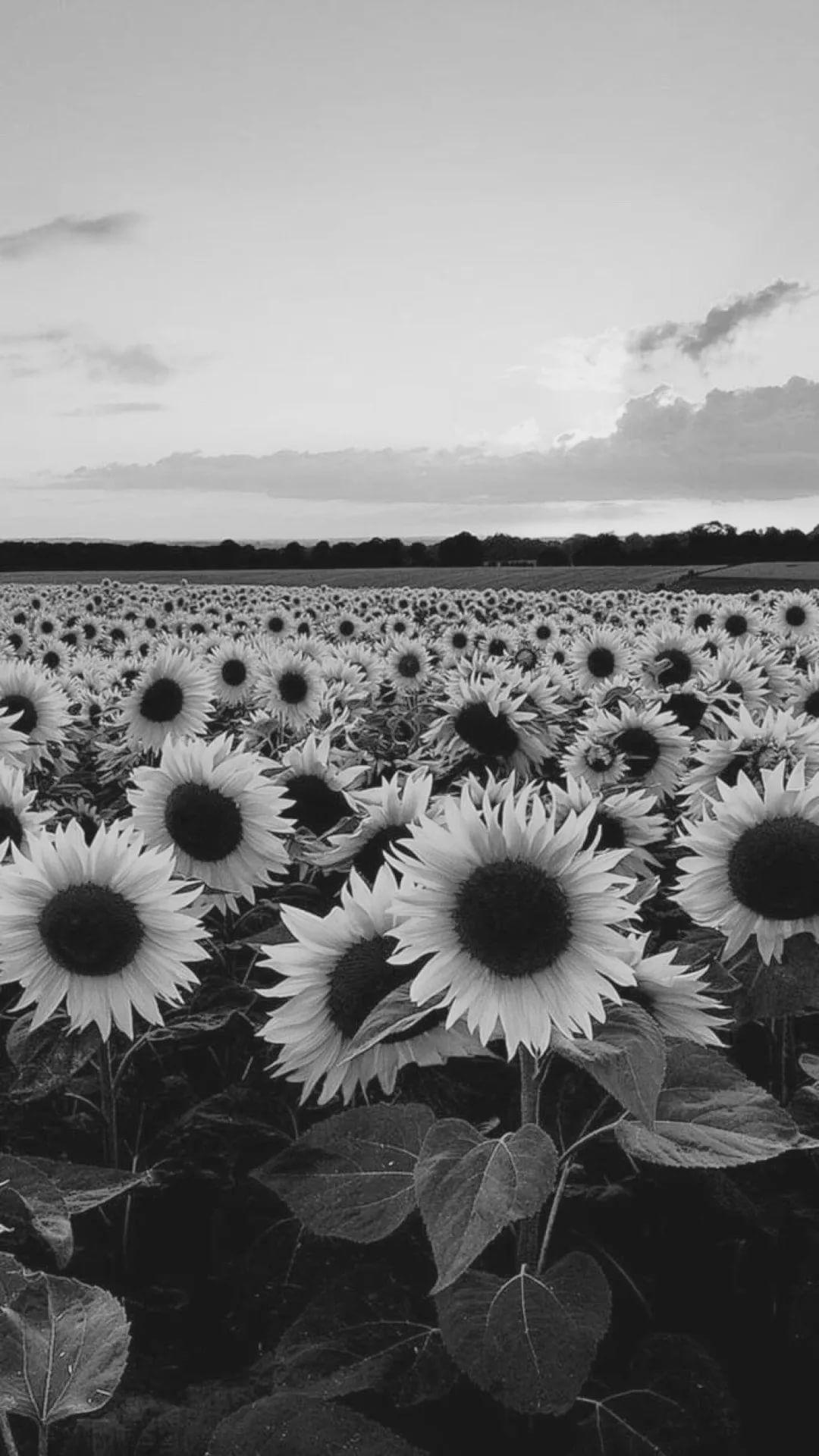 Black And White Flower lock screen wallpaper