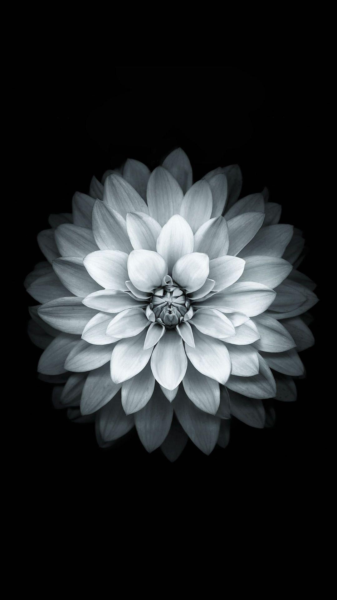 Black And White Flower Samsung Galaxy wallpaper