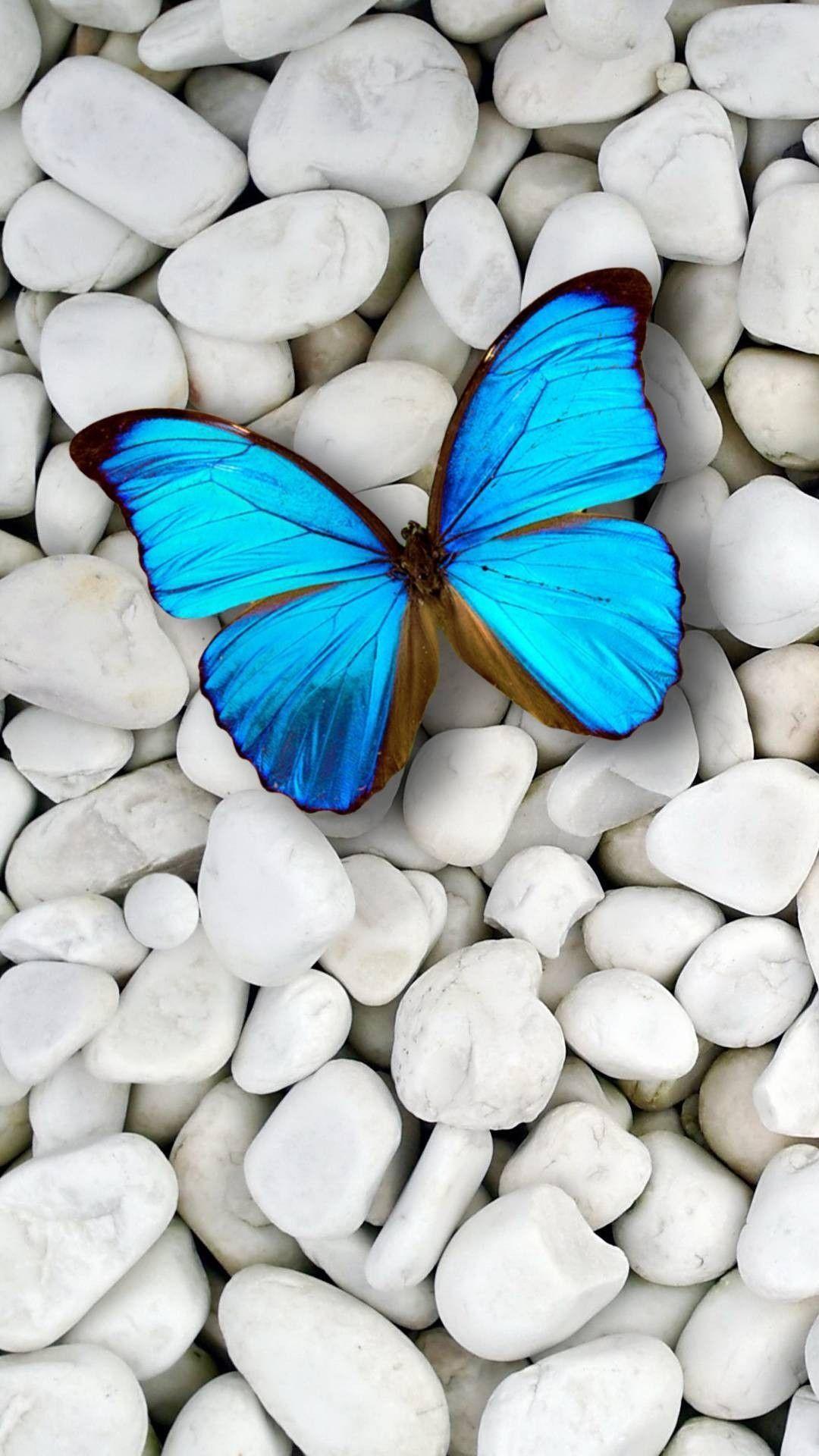 Butterfly Samsung Galaxy s7 wallpaper