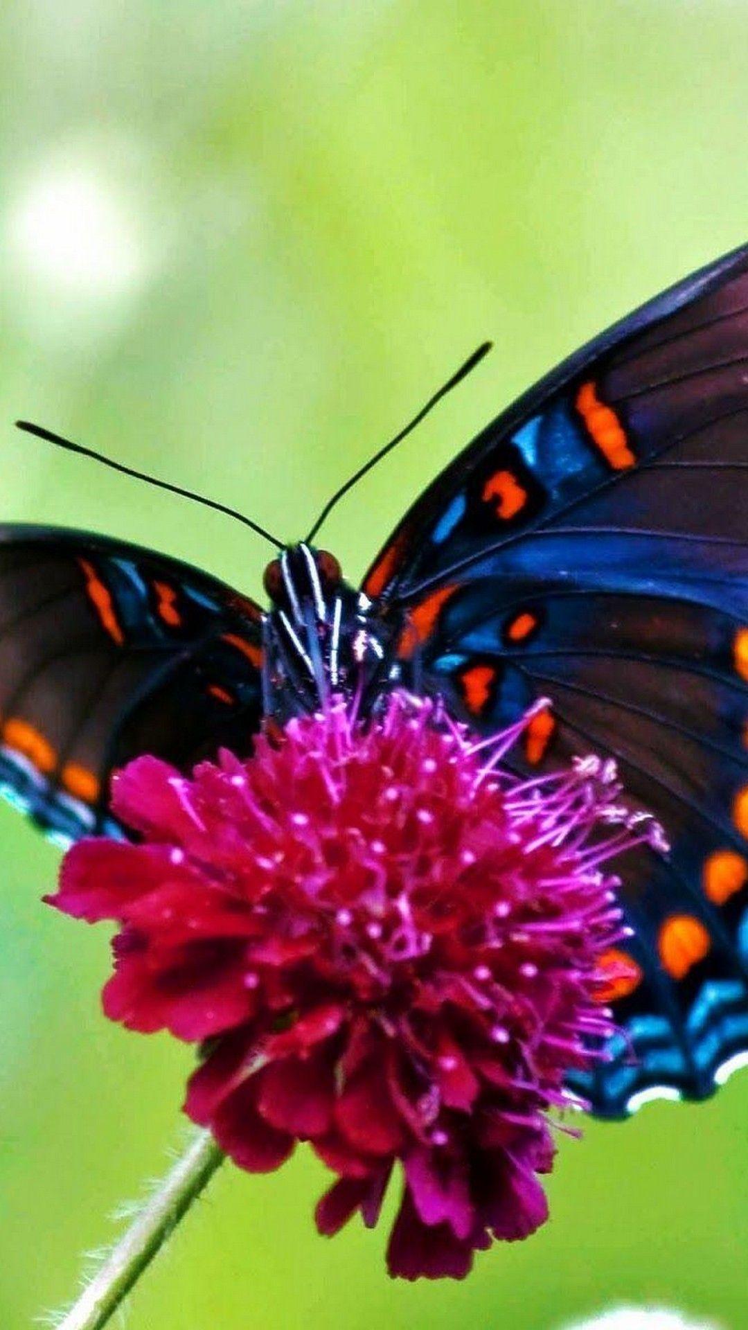 Butterfly lock screen wallpaper