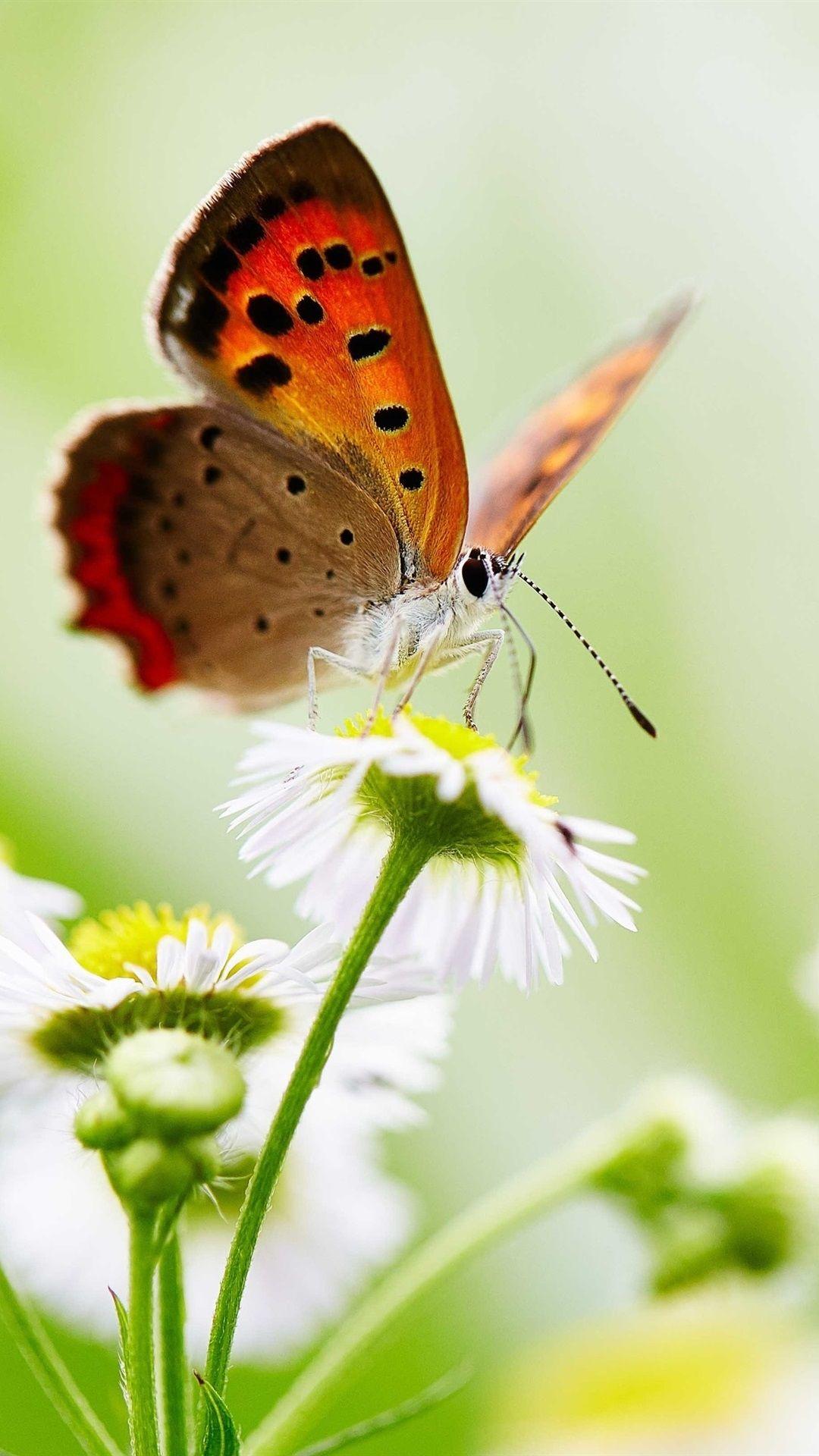 Butterfly screensaver wallpaper