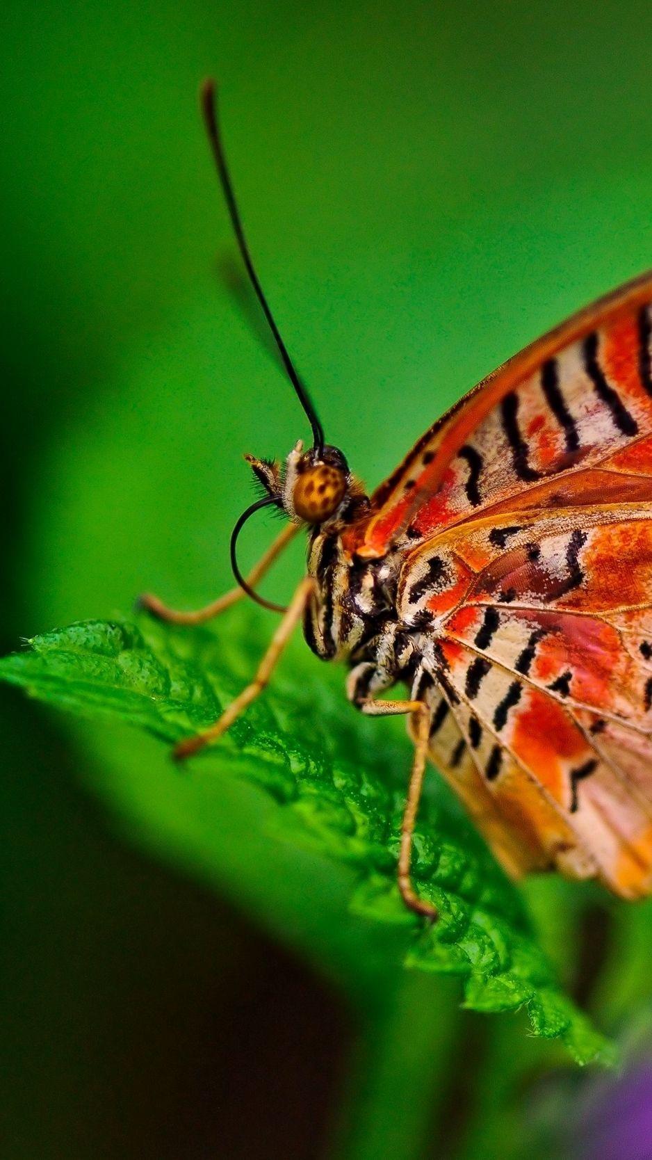 Butterfly iOS 8 wallpaper