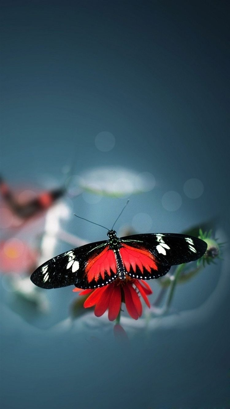 Butterfly phone wallpaper hd
