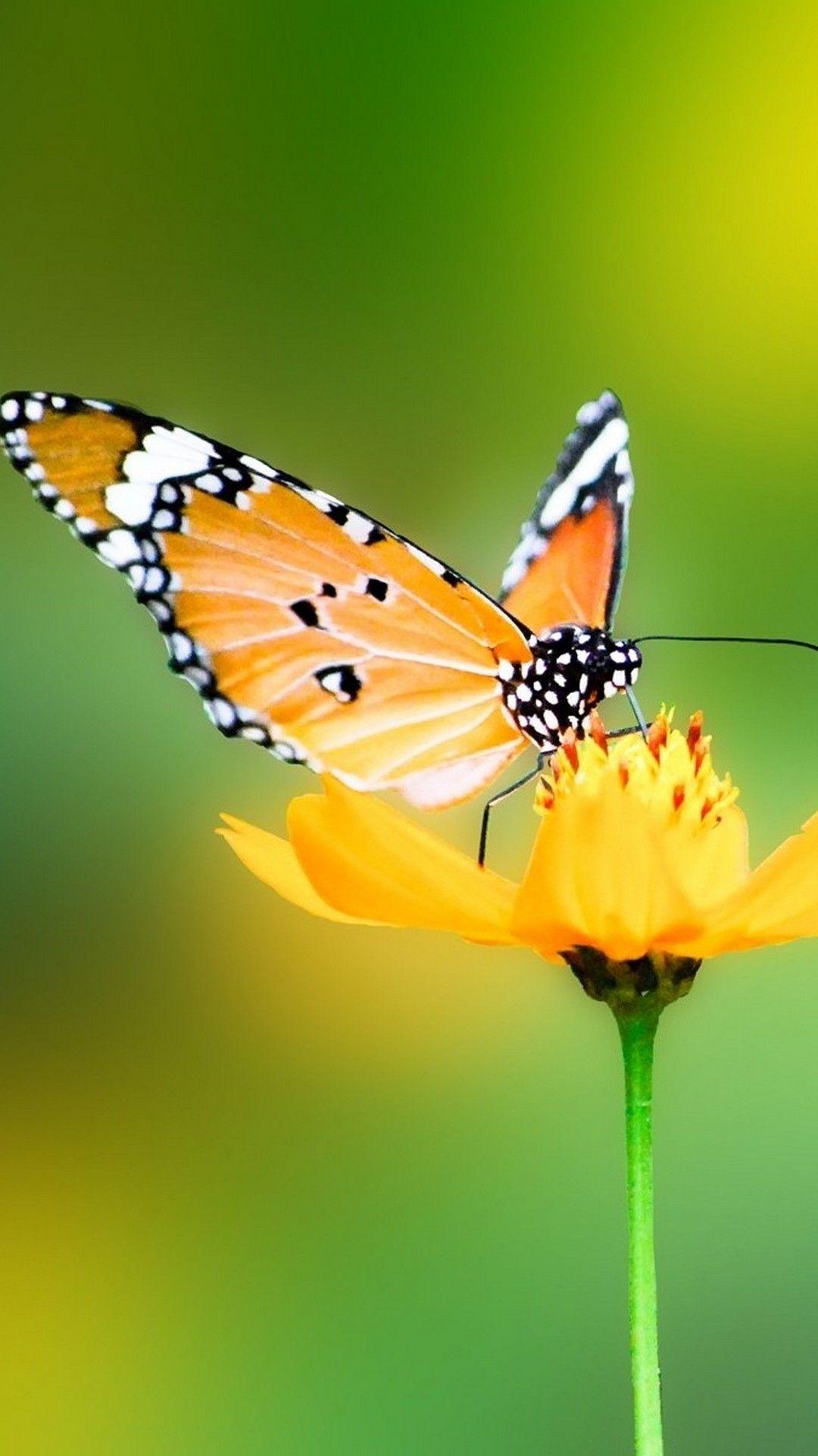 Butterfly iPhone 7 plus wallpaper hd