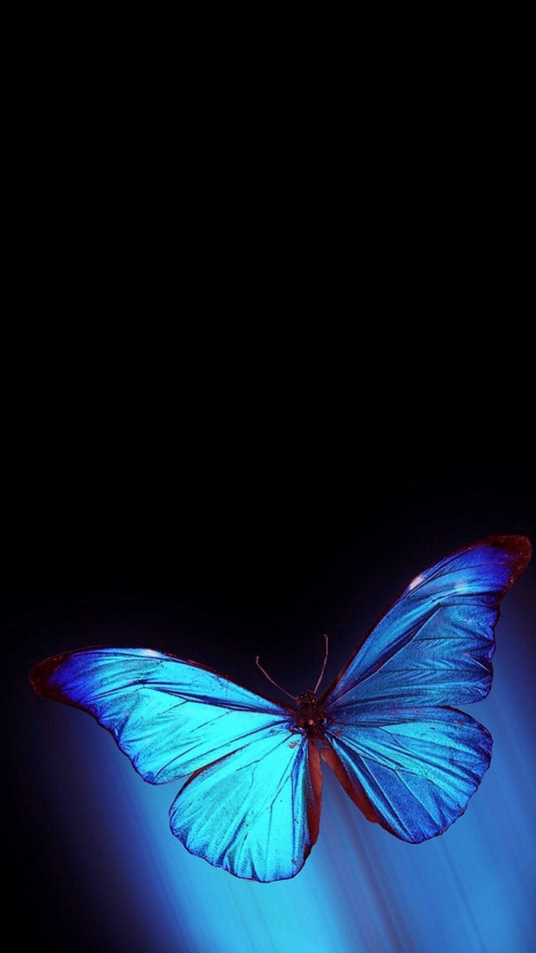 Butterfly Iphone Wallpapers 52 Pictures Wallpaperboat