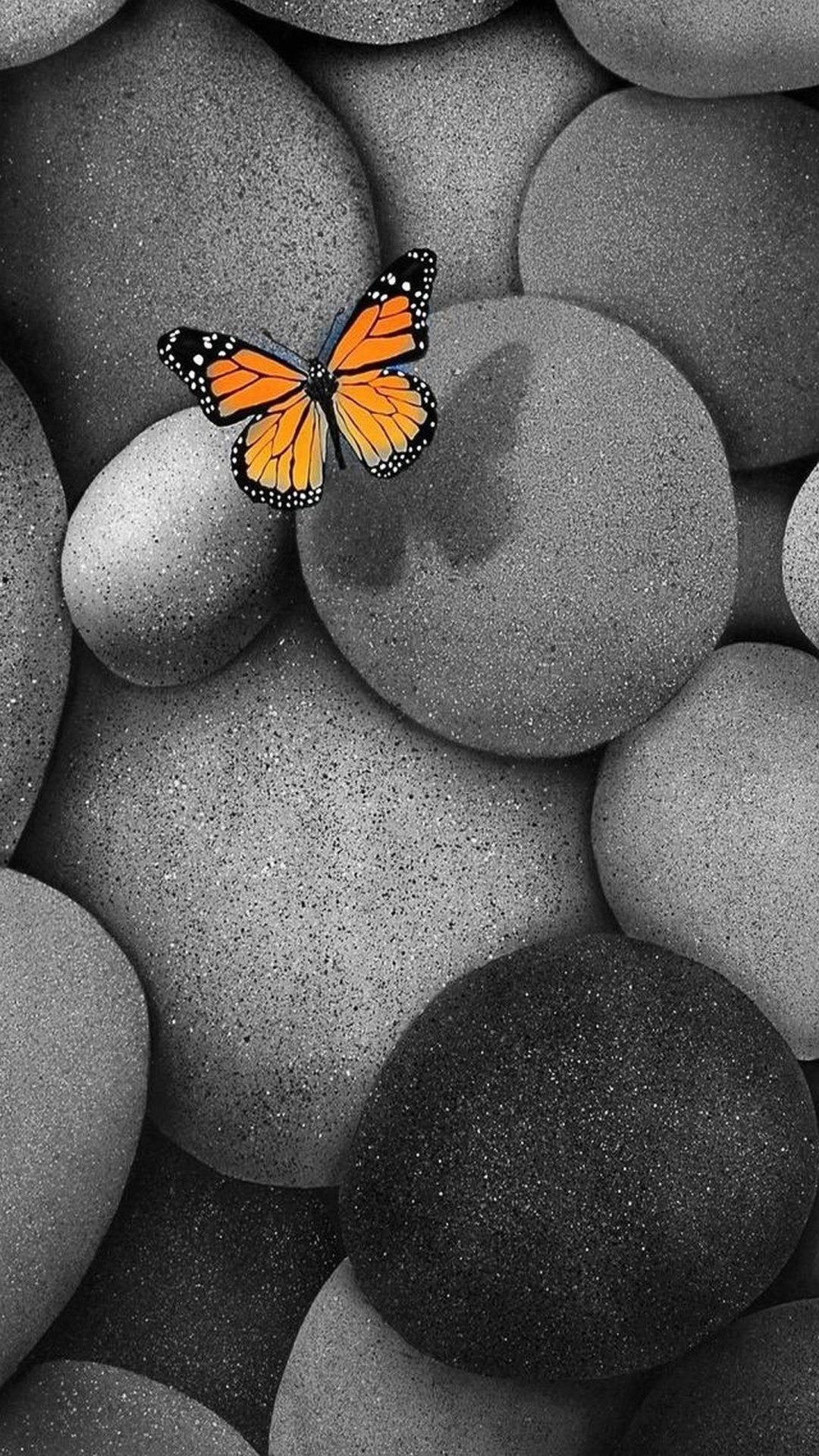 Butterfly iPhone home screen wallpaper