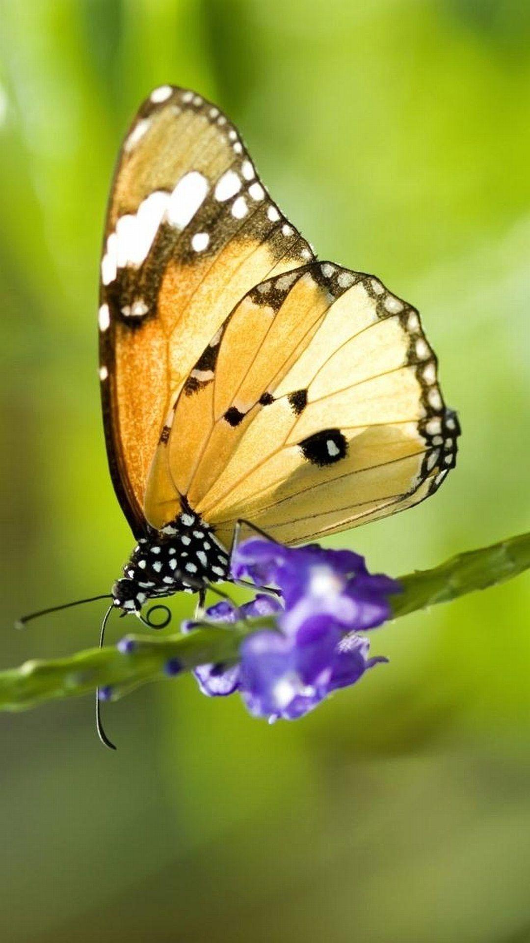 Butterfly iPhone xr wallpaper