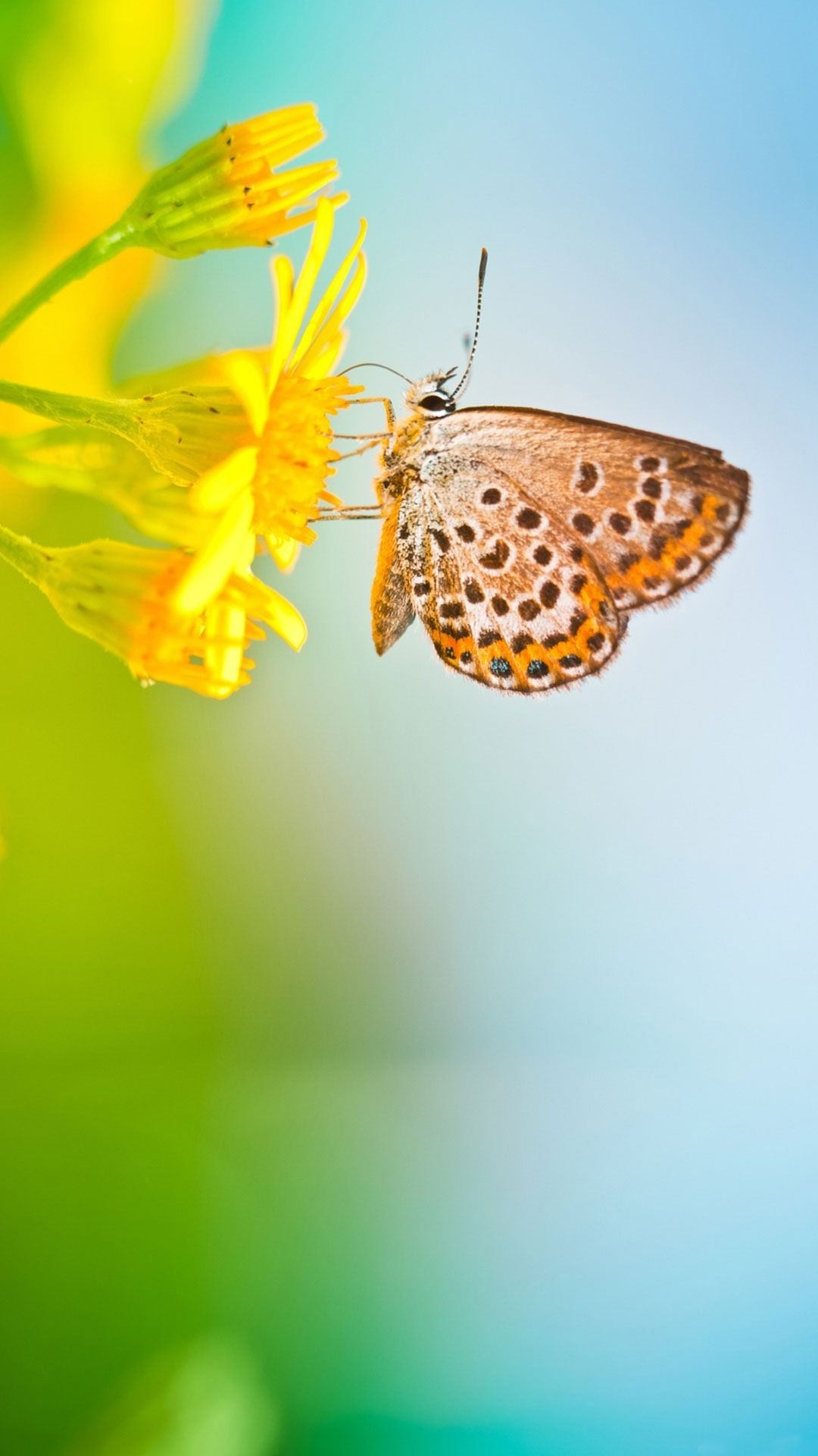 Butterfly iOS 10 wallpaper
