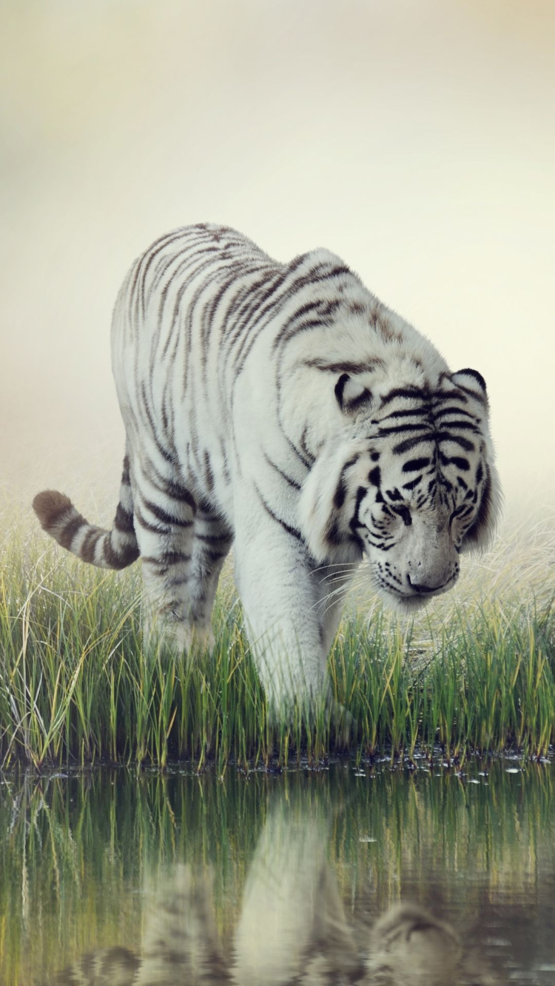 Cool Animal iOS 10 wallpaper
