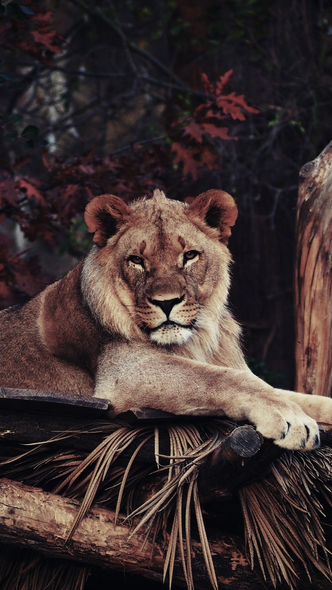 Cool Animal wallpaper for Android