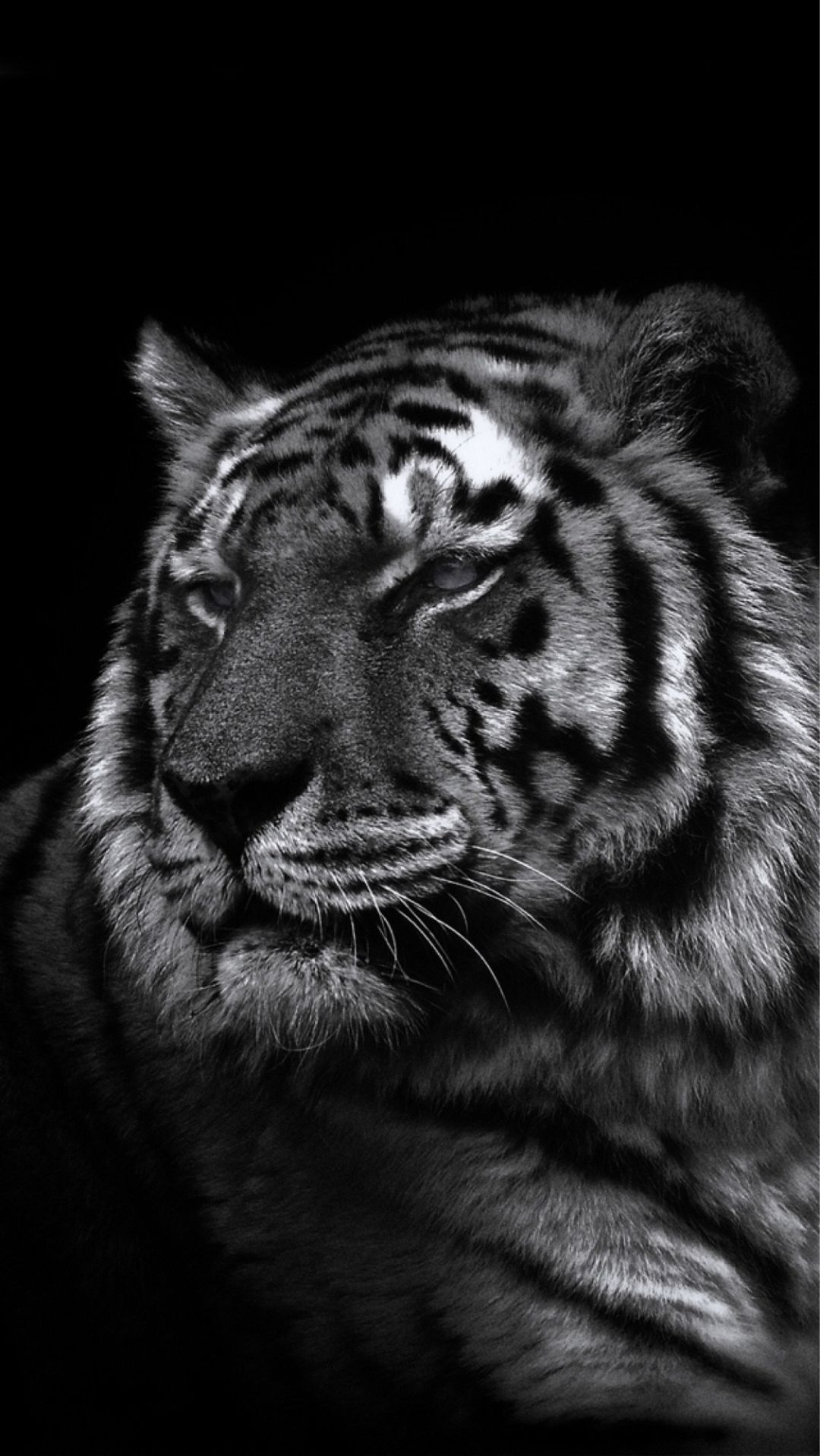 Cool Animal iPhone wallpaper size