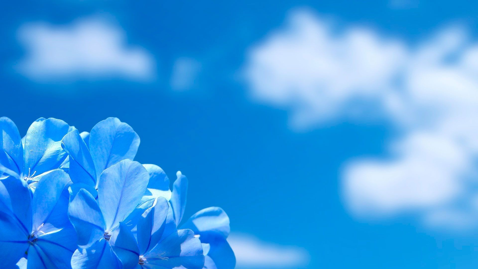 Cute Blue Flower Wallpaper