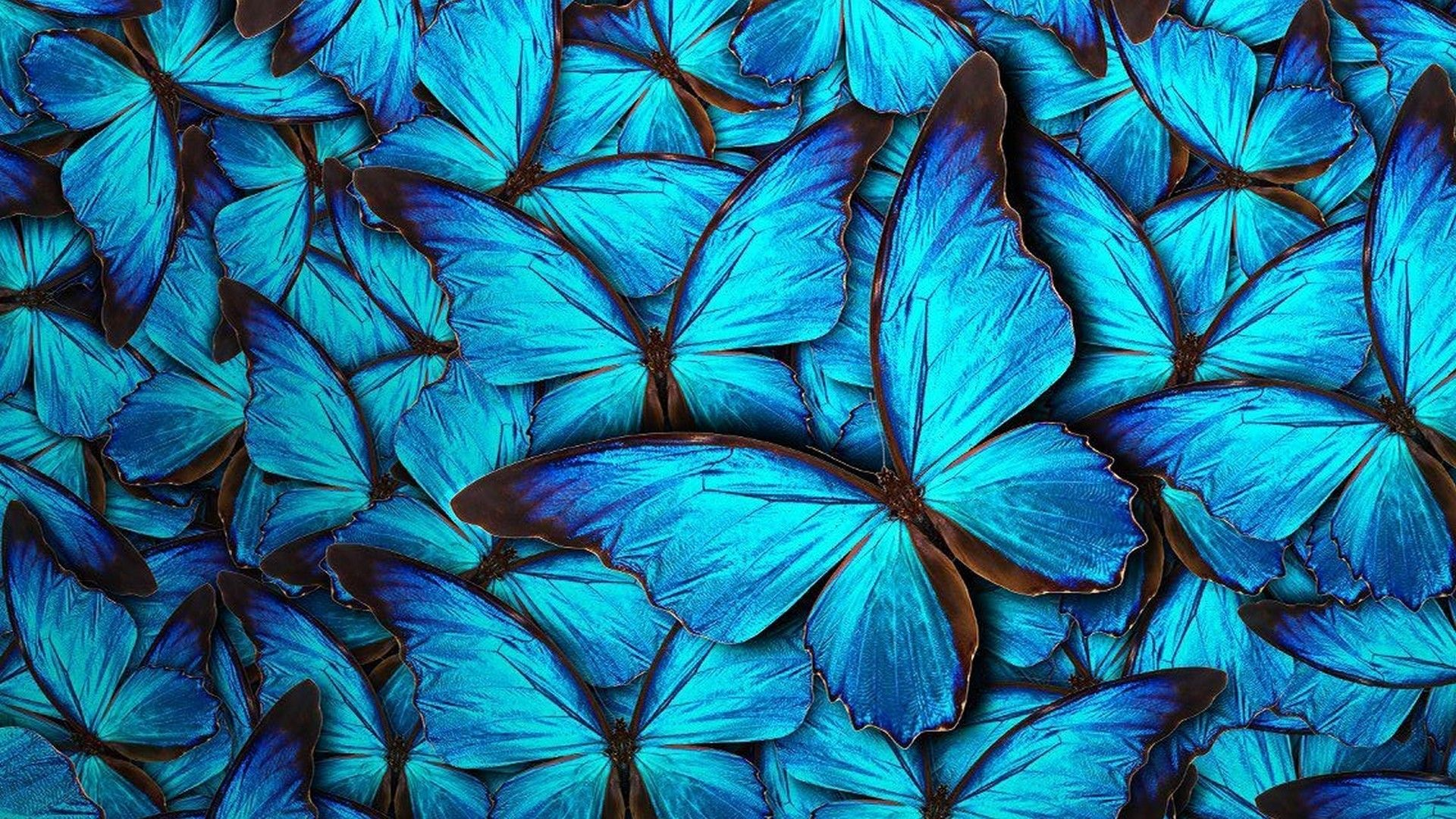 Cute Blue batterfly download free wallpapers for pc in hd
