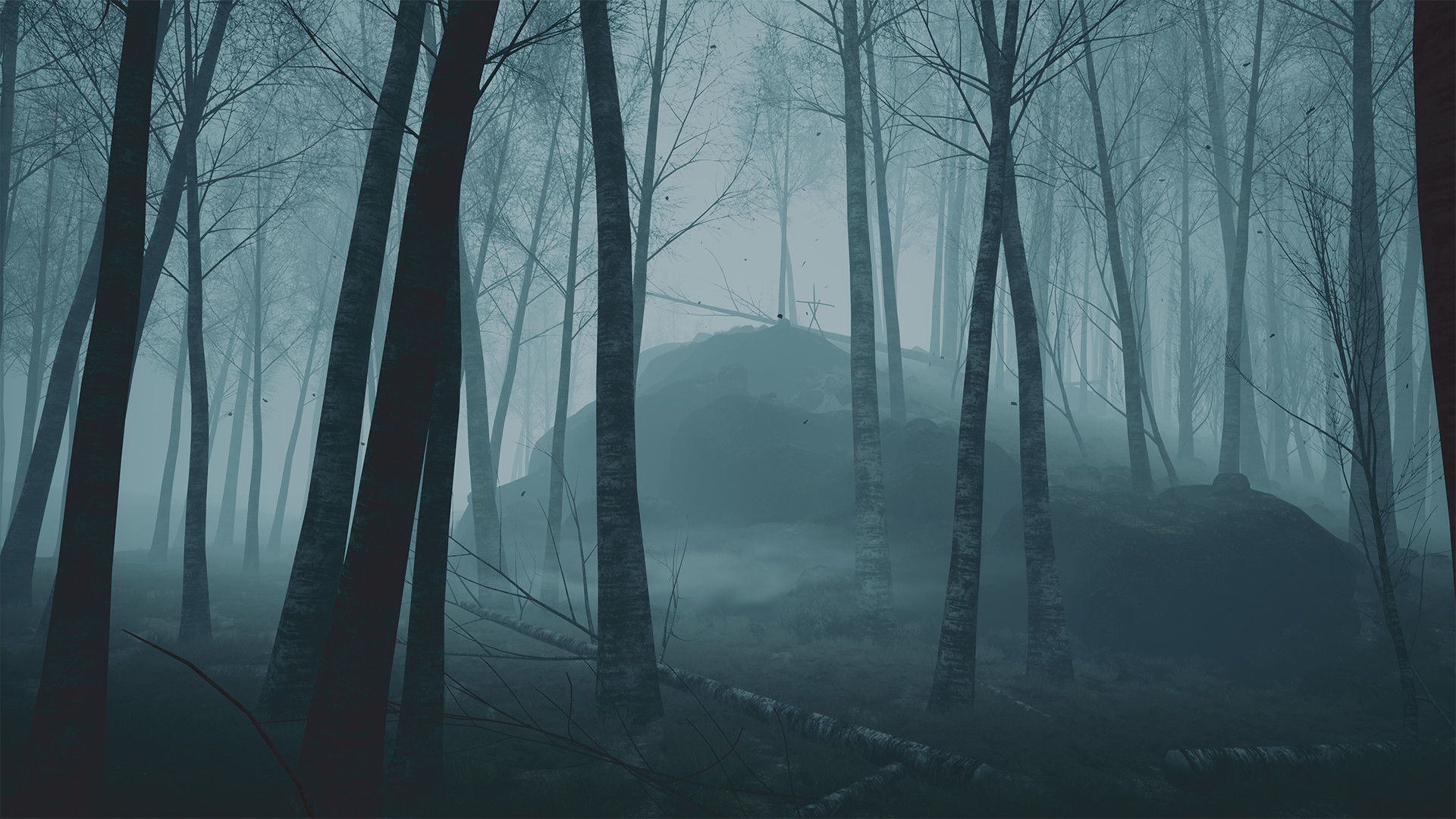 Dark Forest Background, Spooky Forest Background HD