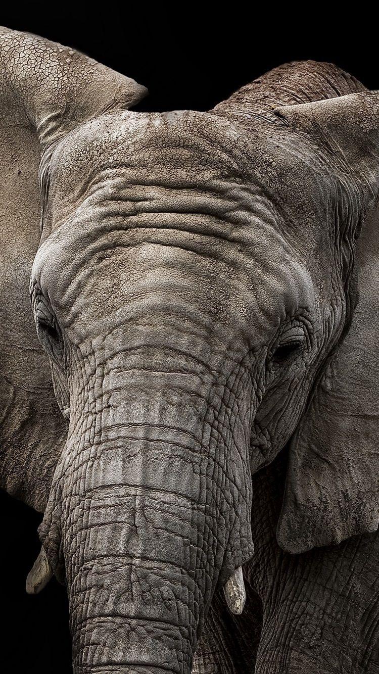 Elephant samsung wallpaper