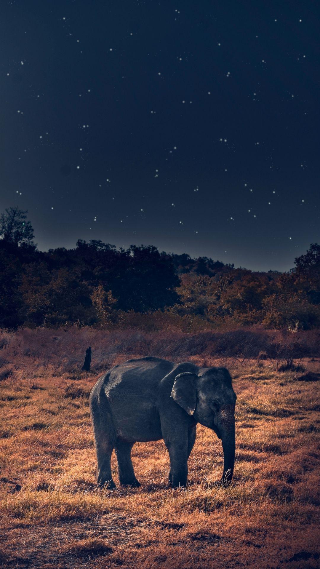 Elephant wallpaper 1080x1920