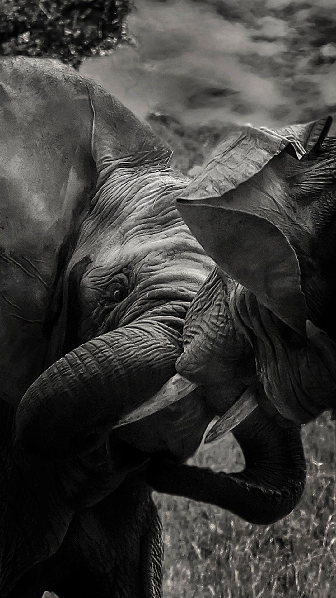 Elephant Apple iPhone wallpaper